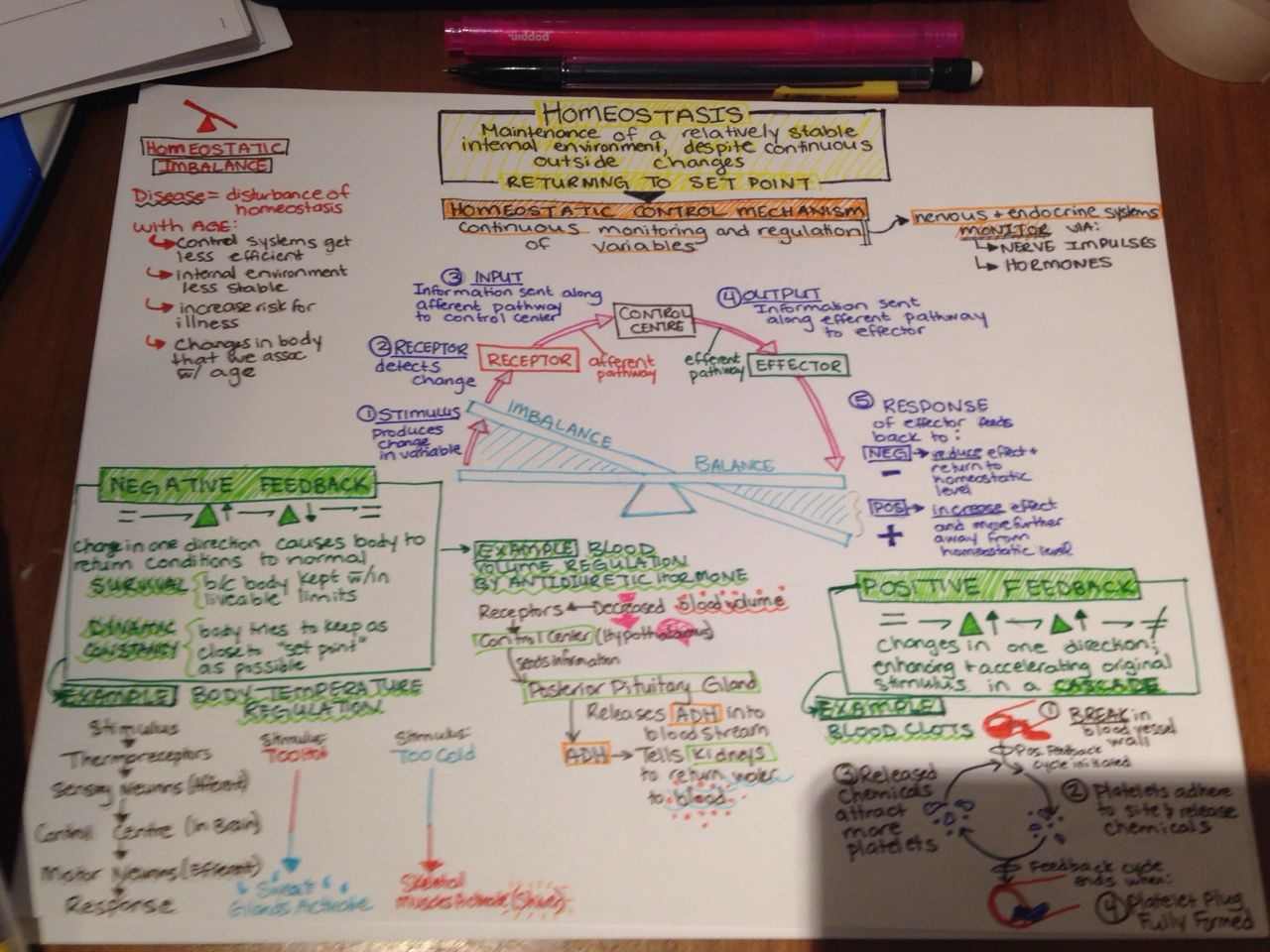 Homeostasis Concept Map Complete Gt Pre Slp Is Now