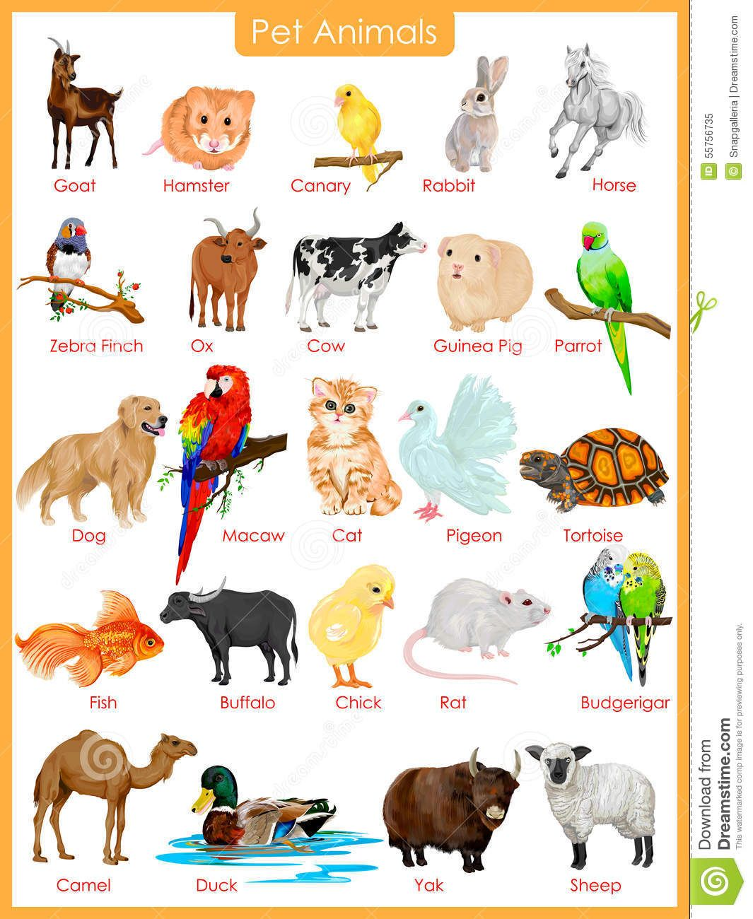 Image Result For Pet Animals Pictures