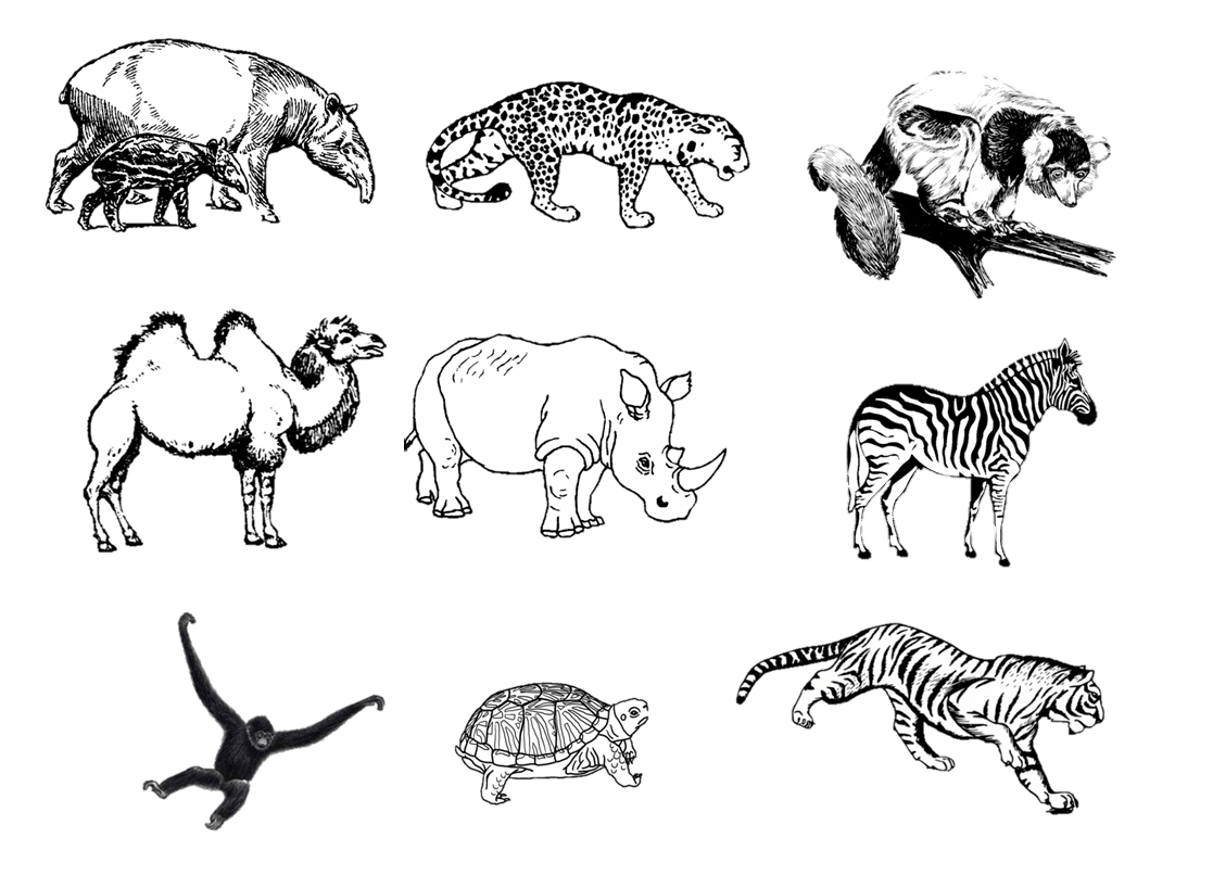 Animal Drawing Activity Zoo How