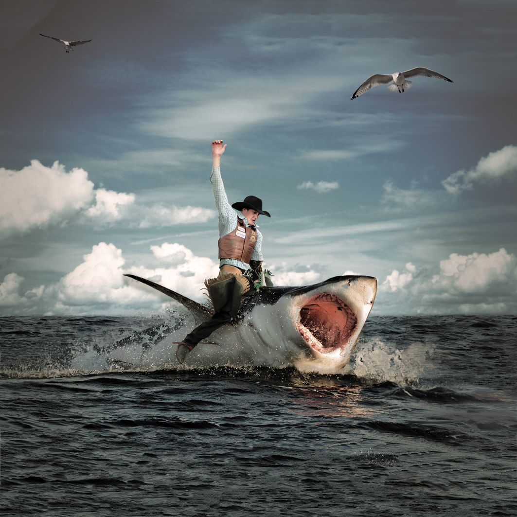 Wonder When We Ll See This Live Shark Rodeo By Leidefors Photoshop Creativity