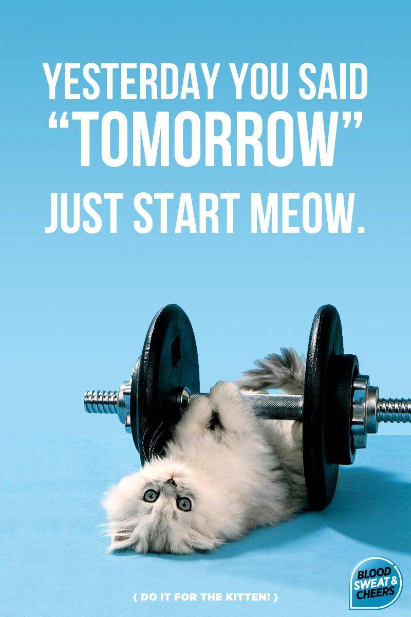 Do it for the kitten blood sweat cheers running meme