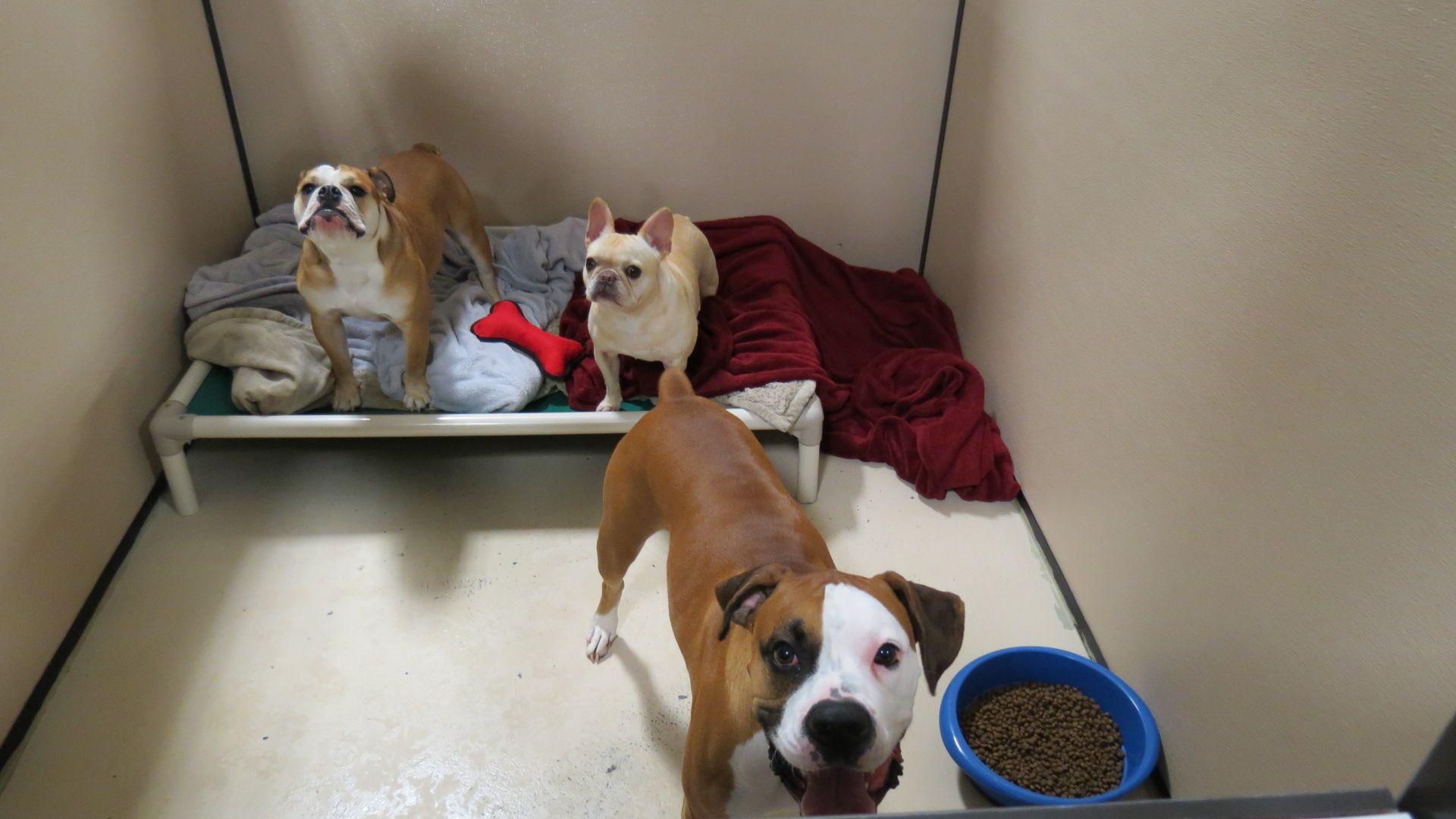 Elaine s Pet Resorts Dog Boarding & Dog Daycare