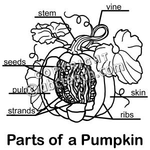 Clip Art: Pumpkin Cut Away B Labeled  preview 1 | 1st
