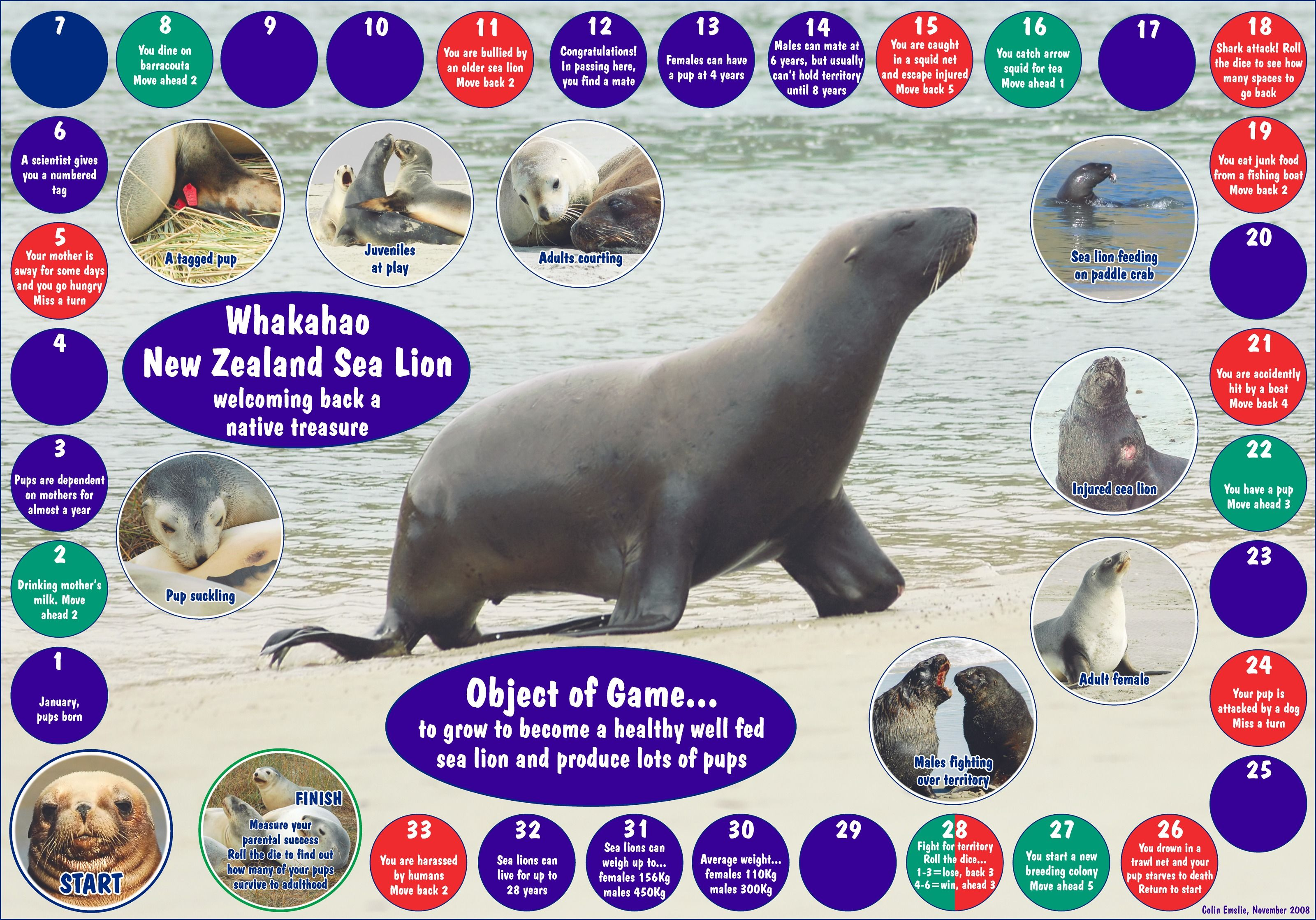Sea Life Worksheets