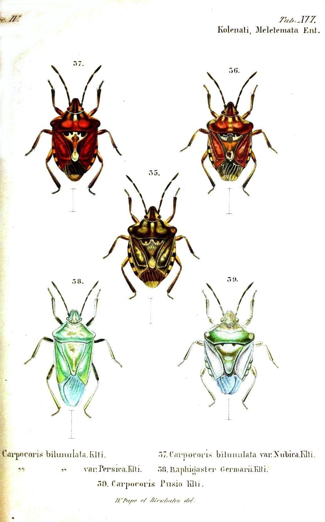 Beautiful Insect Printables Vintage Printables
