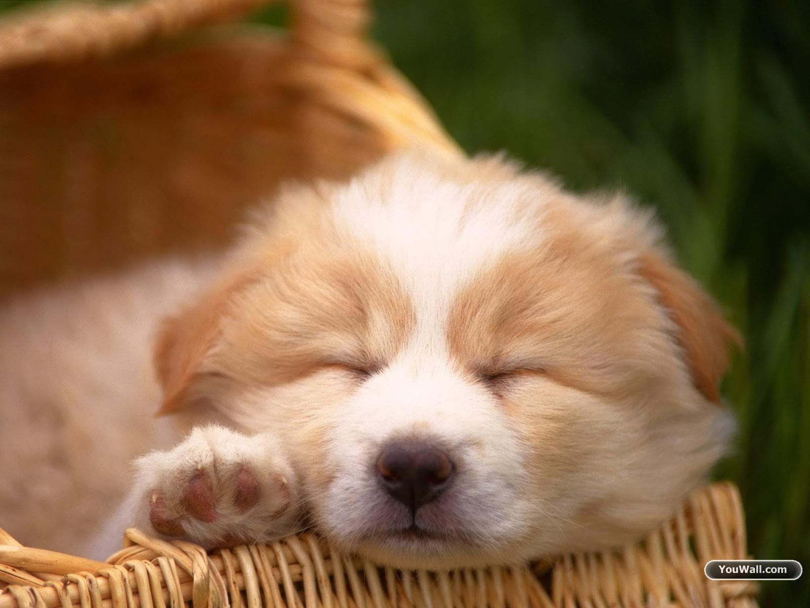 ? cute dog wallpapers ? android apps on google play | hd