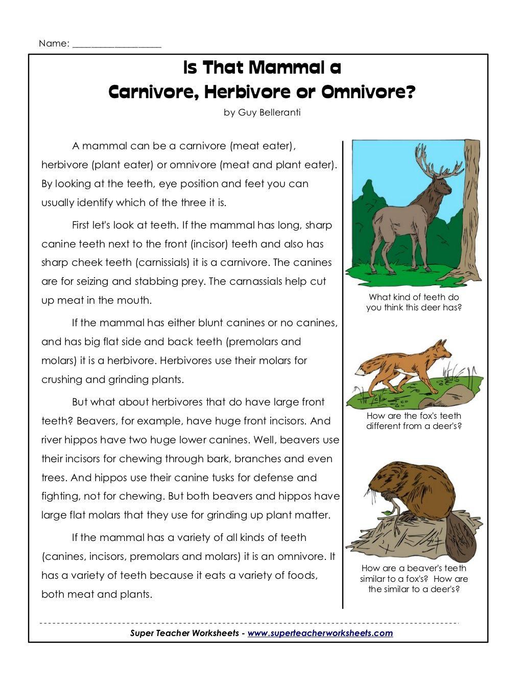 Cycle 2 Week 2 Science Carnivores Herbivores Or Omnivore