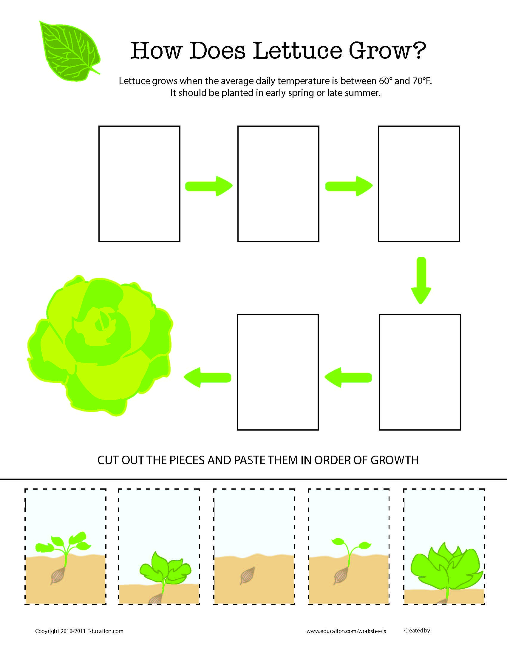 Parts Of A Plant Worksheet Kindergarten