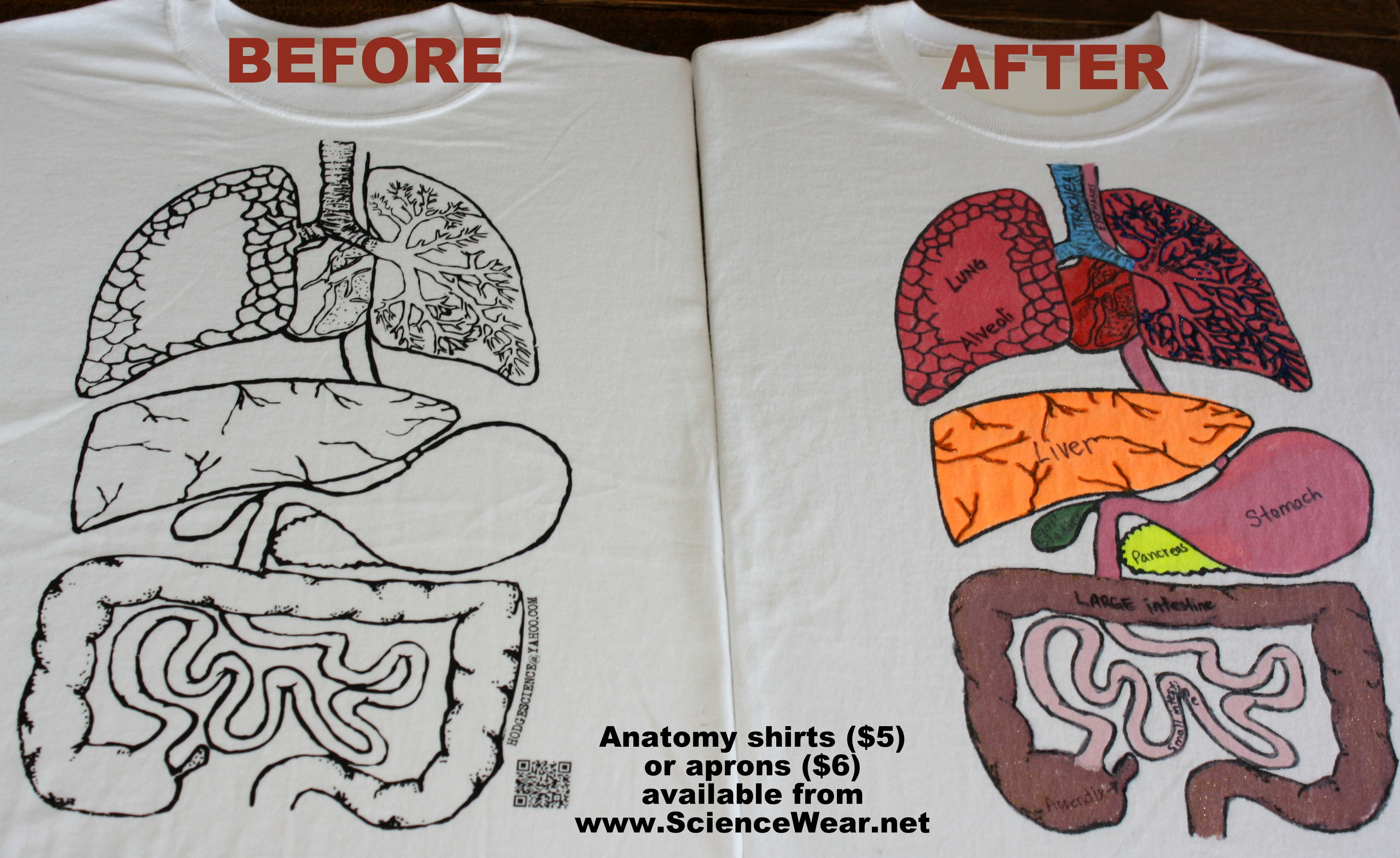 Anatomy Project For Entire Classroom Available In T Shirts Or Apron Iencewear Great