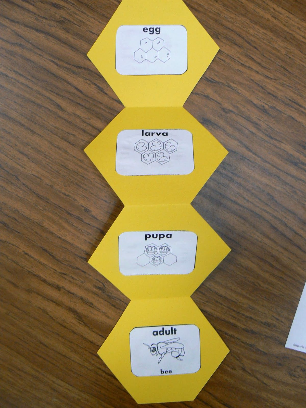 Here Is Our Honeycomb Hexagon Bee Shape Book After