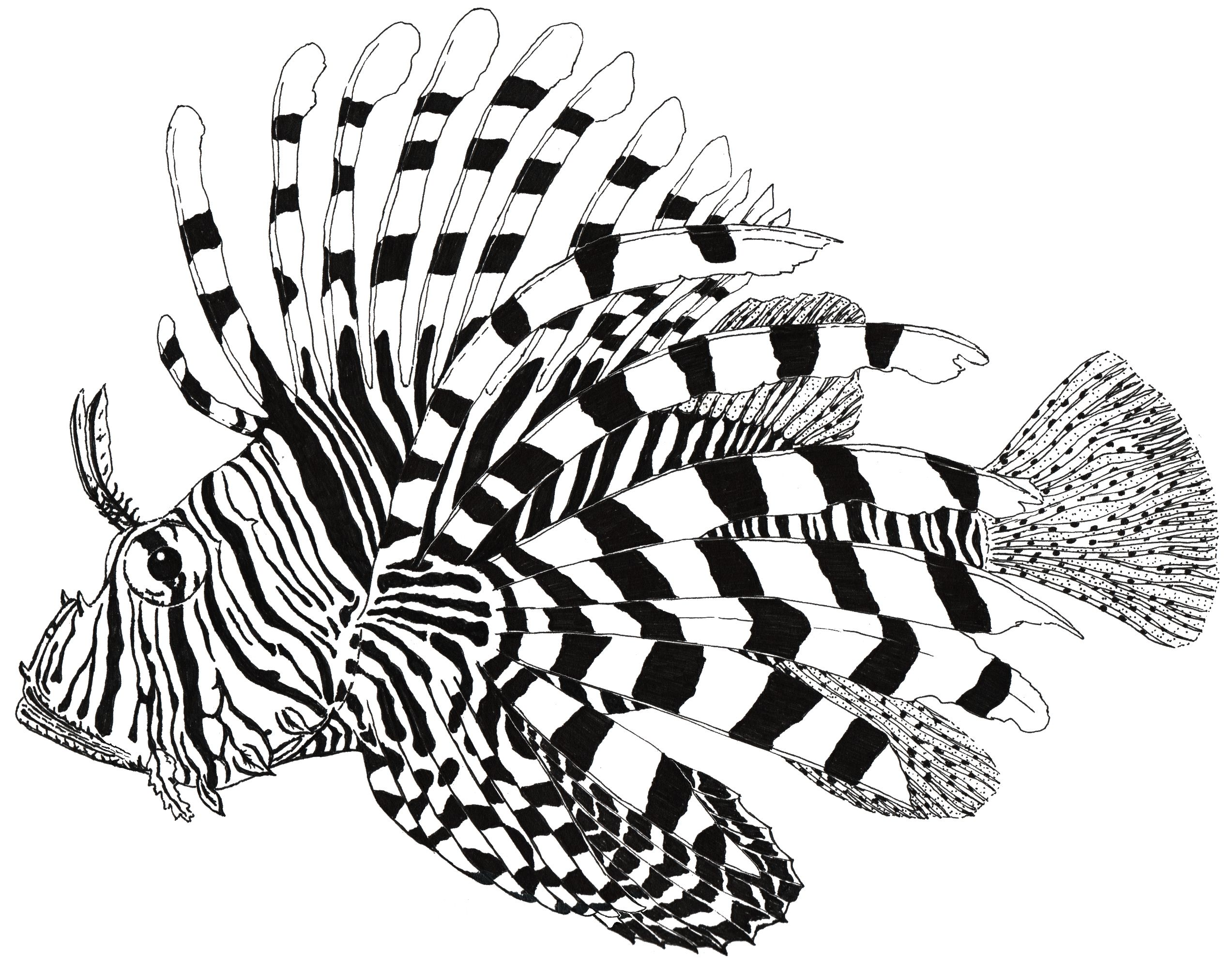 Lionfish Drawing