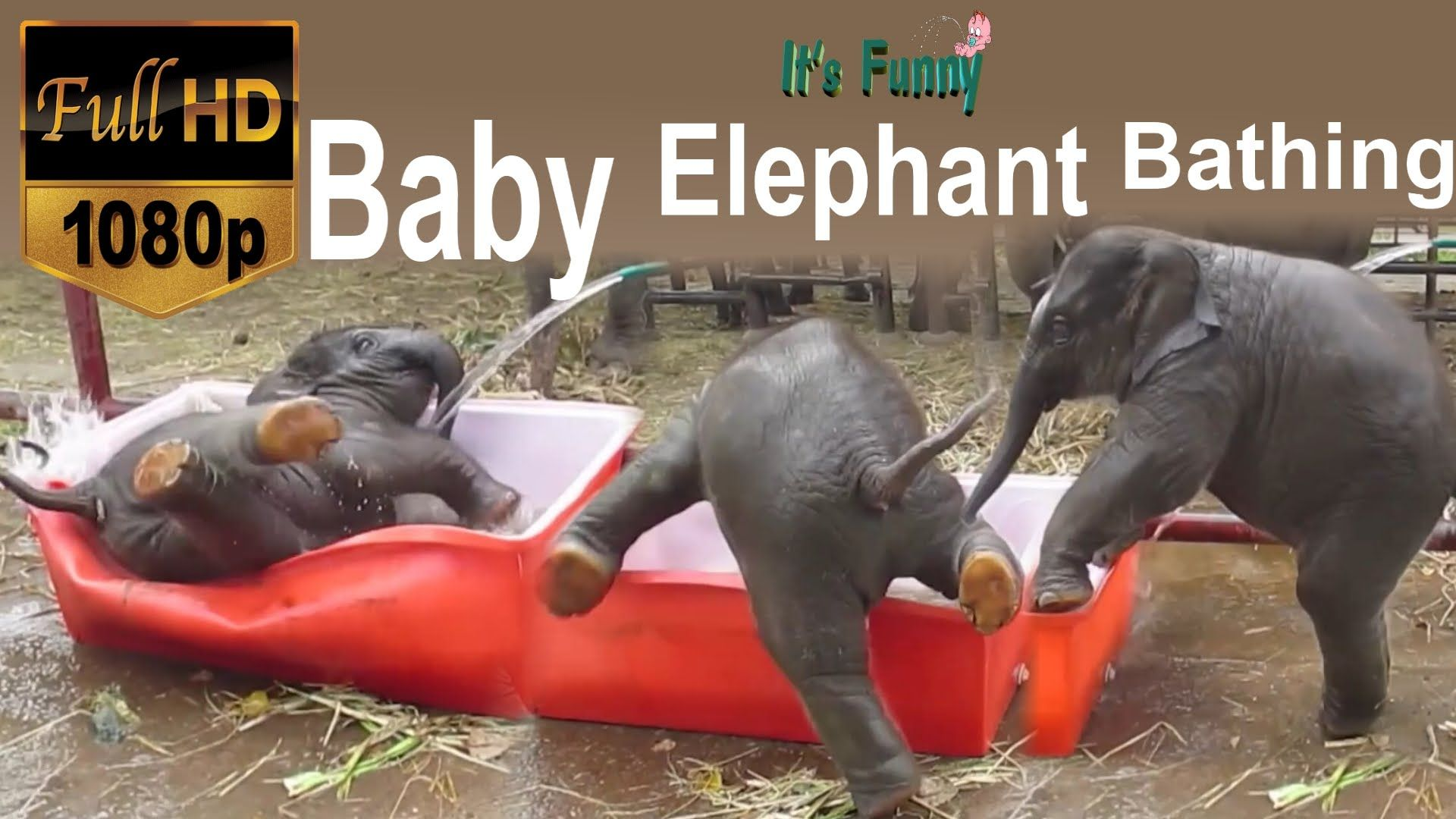 funny baby elephant bathing - hd - 1080p | video's | pinterest