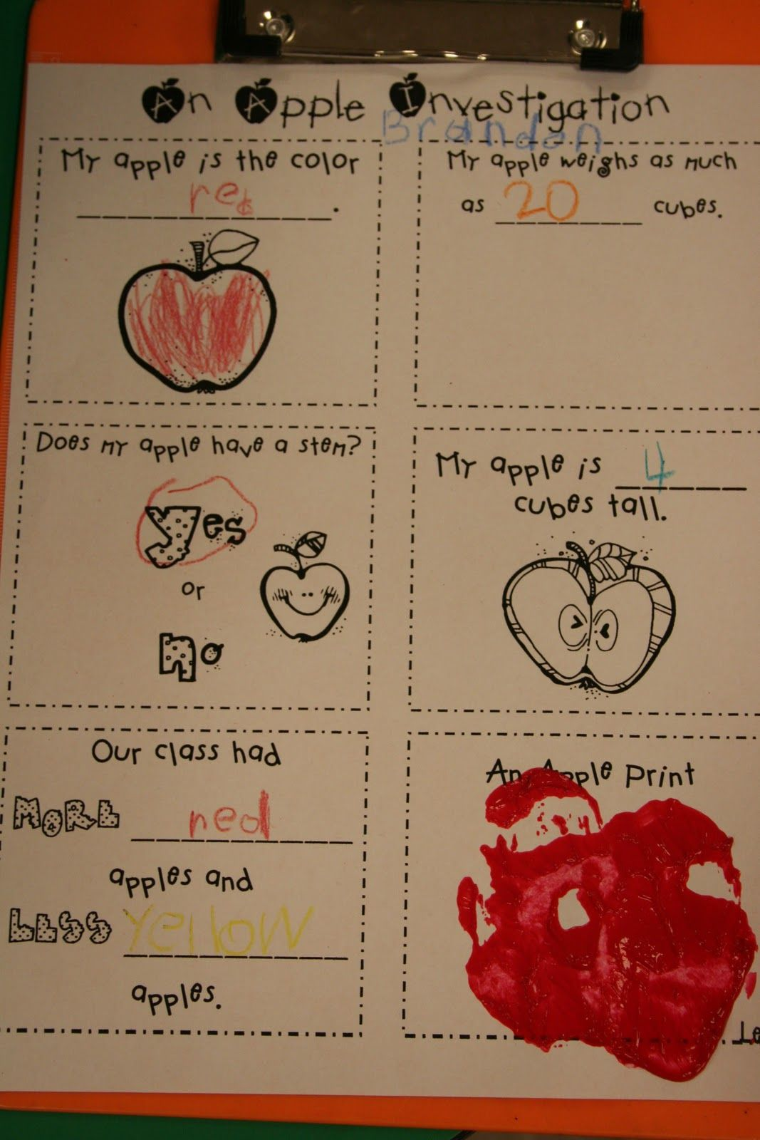An Apple Investigation Mrs Lee S Kindergarten Apples