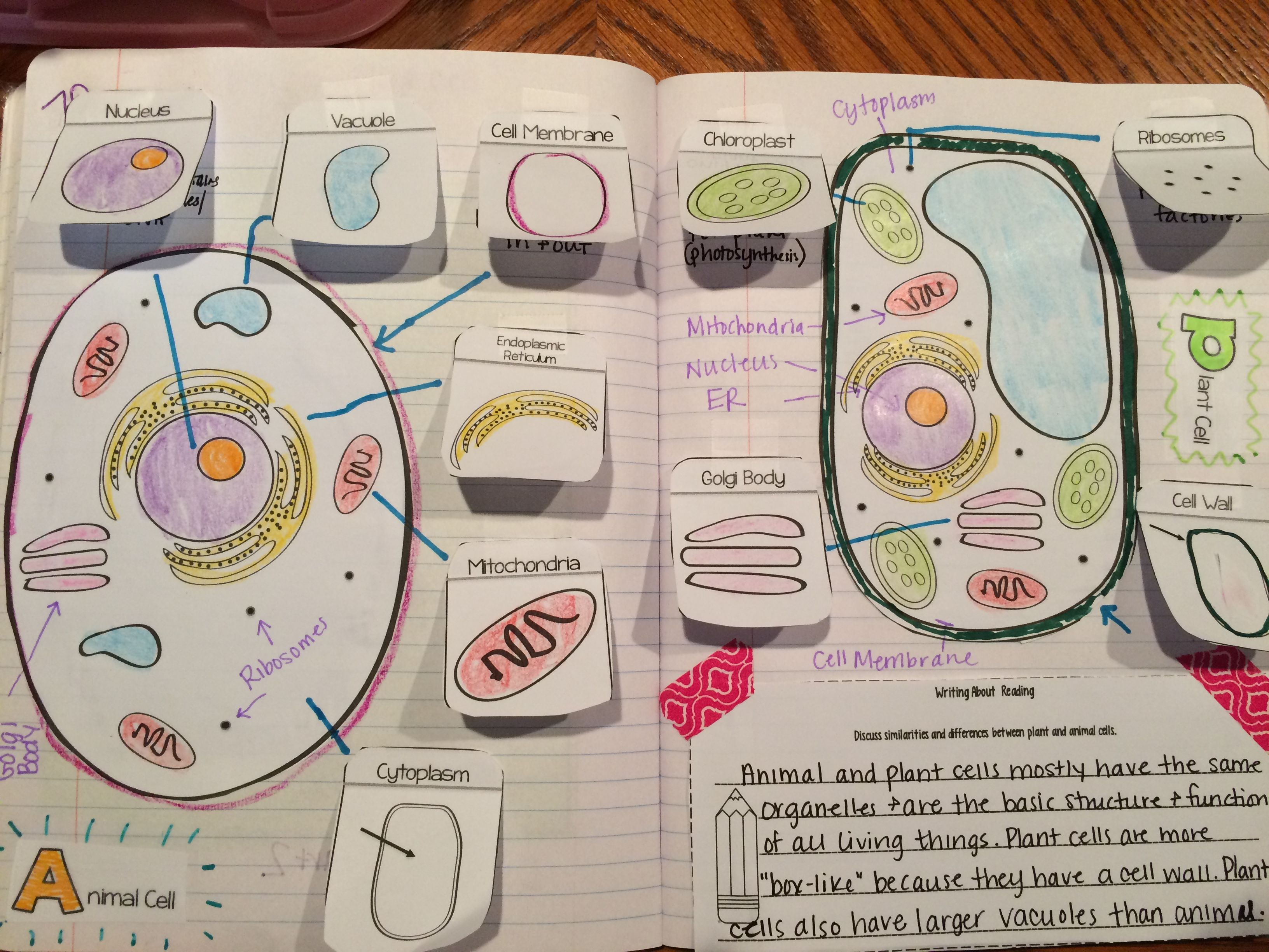 Best 25 Plant Cell Organelles Ideas