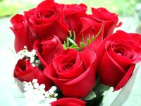 beautiful roses wallpapers free download