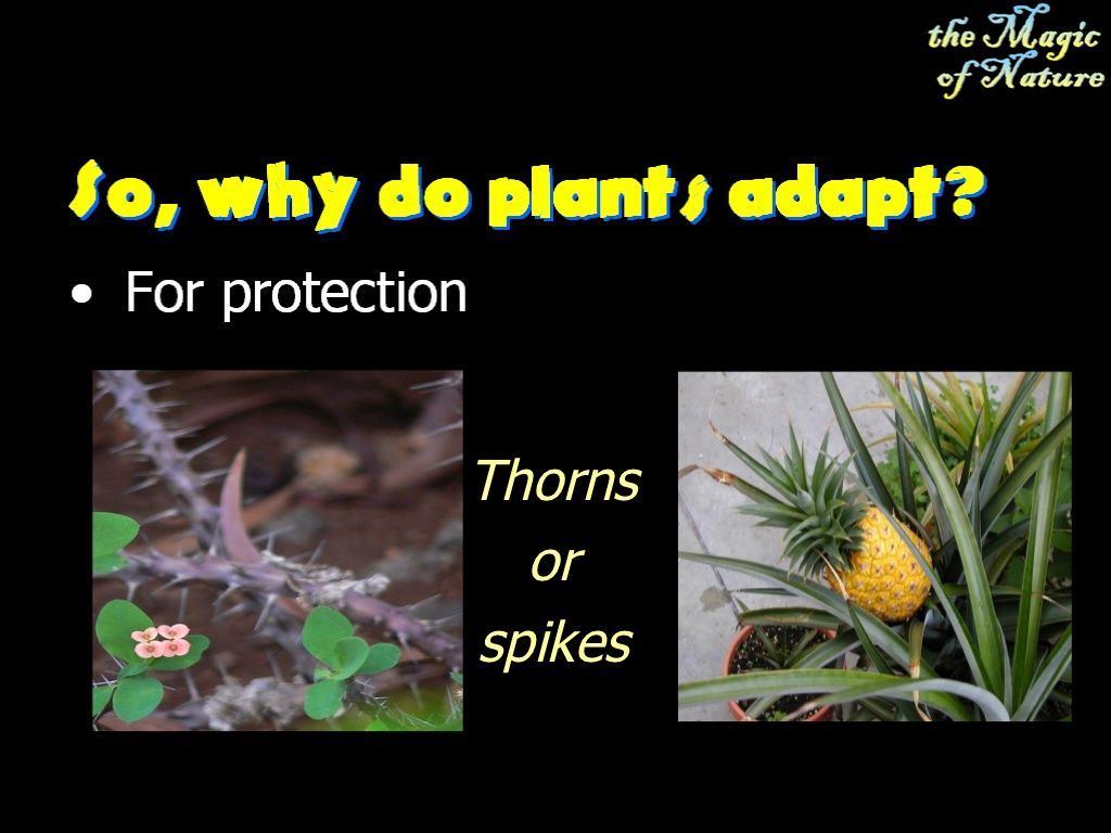 Plant Adaptation Elementary