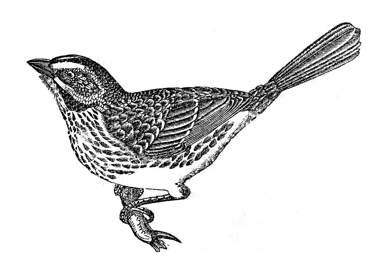 2 Cute Vintage Bird Images
