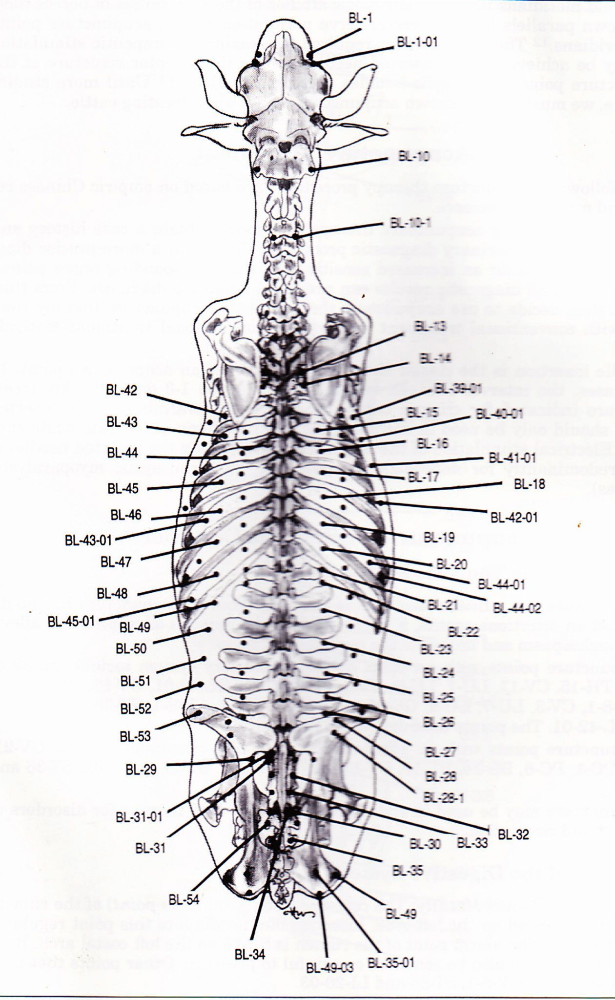 Cow Acupuncture Points