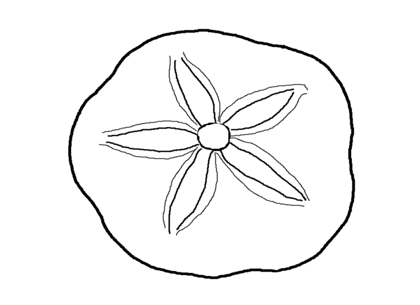 how to draw a hawk for kids  az coloring pages  sea life