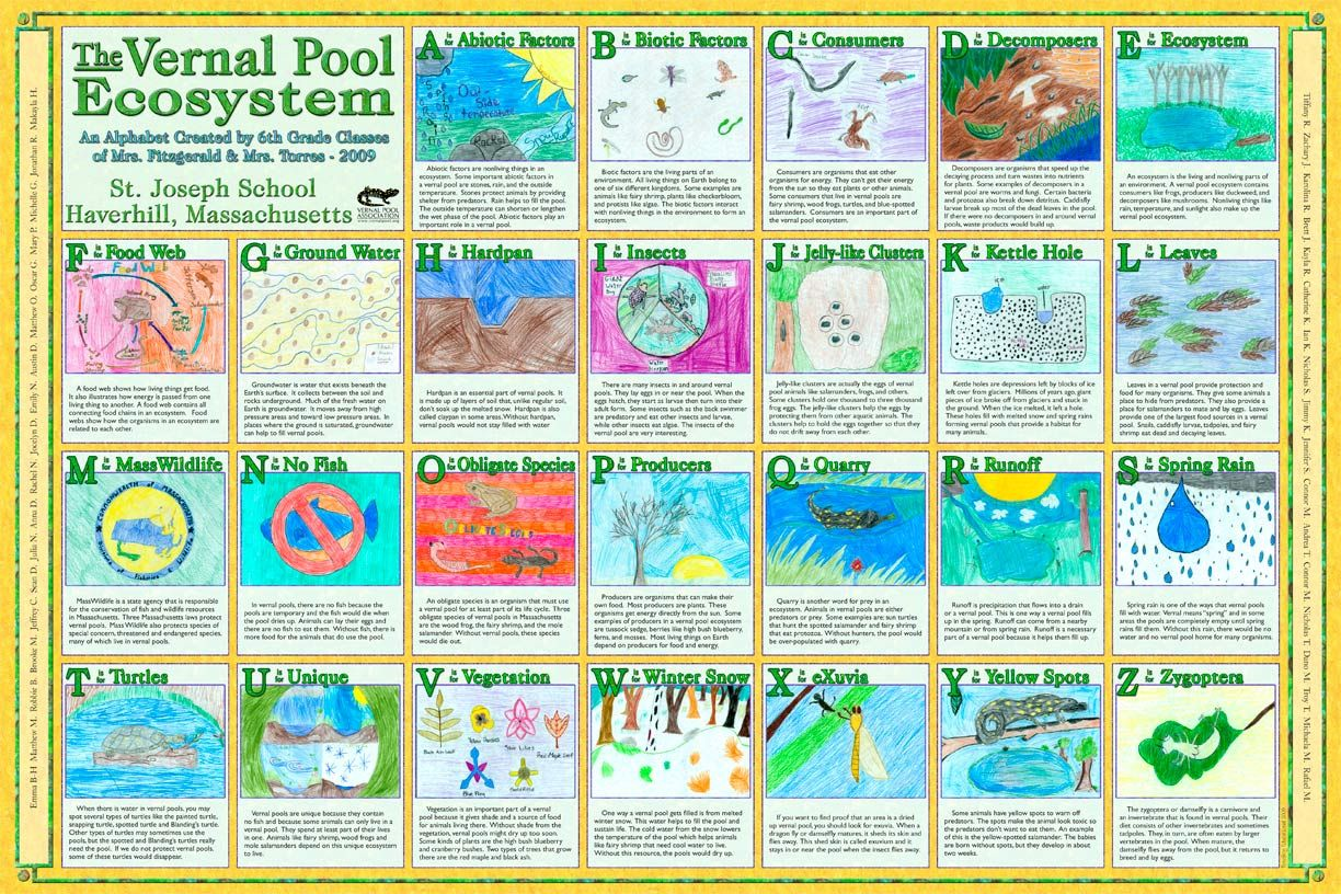 Vernal Pool Ecosystem Abcs Great For A Unit Study On Ecosystems Or Water Biology