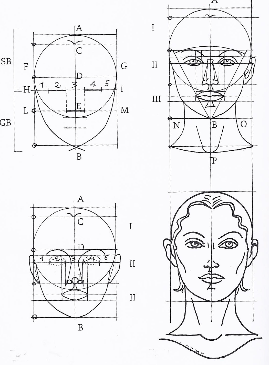 Golden Rectangle In Faces Of The Female Face 3