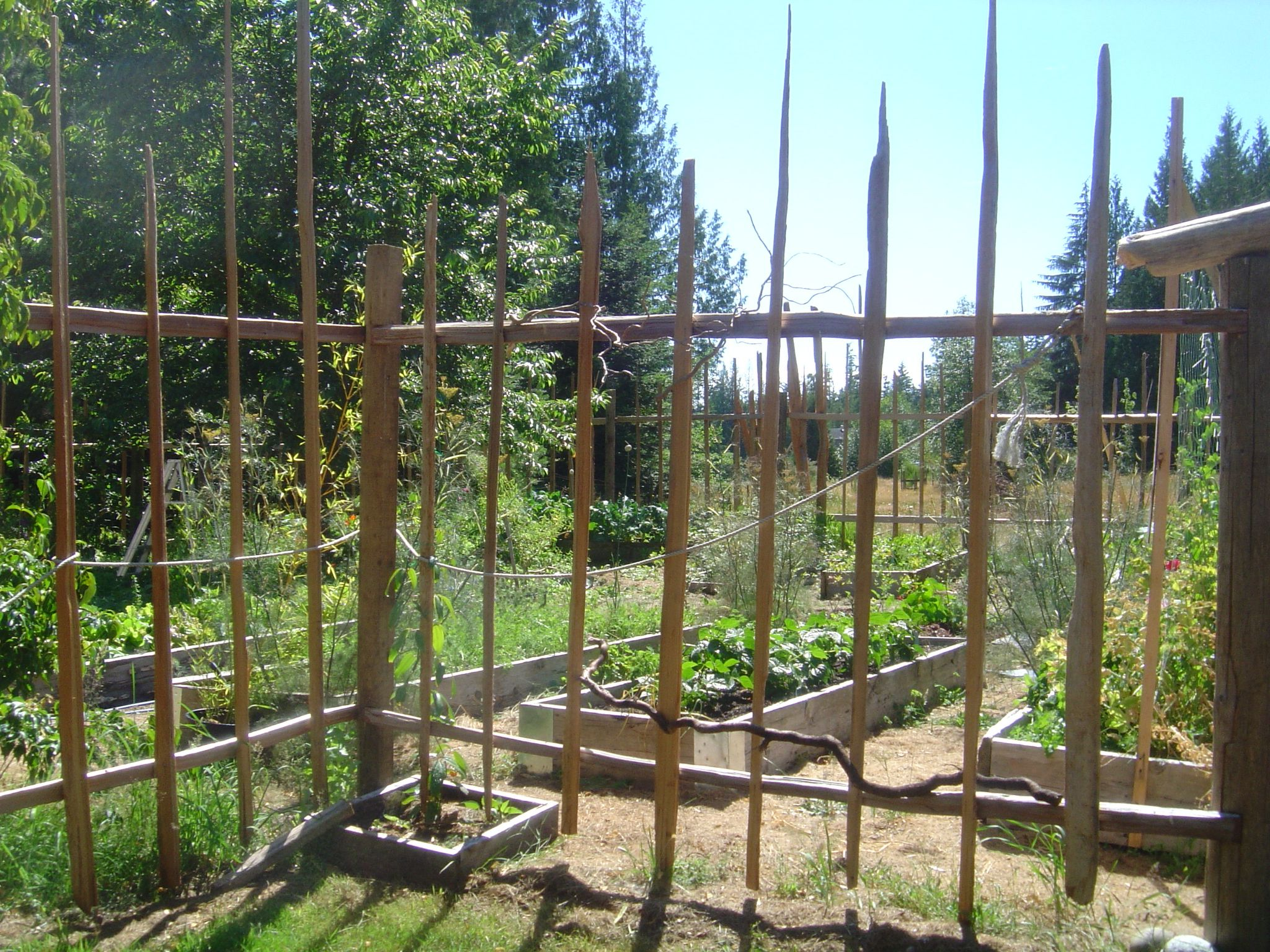 Diy Garden Deer Fence And How To Build A Deer Proof Funky