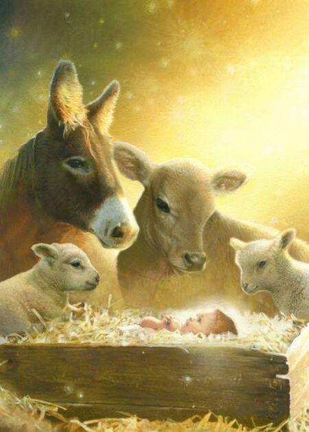Christmas Animal Nativity Jesus Pinterest Christmas