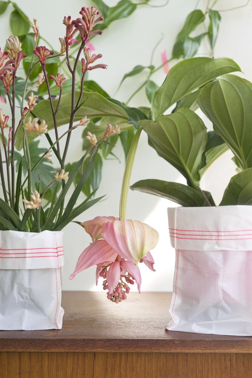 Best Kitchen Gallery: Tropical Beauties By Urban Jungle Bloggers Flowers Pinterest of Pink And Green Tropical Houseplants on rachelxblog.com