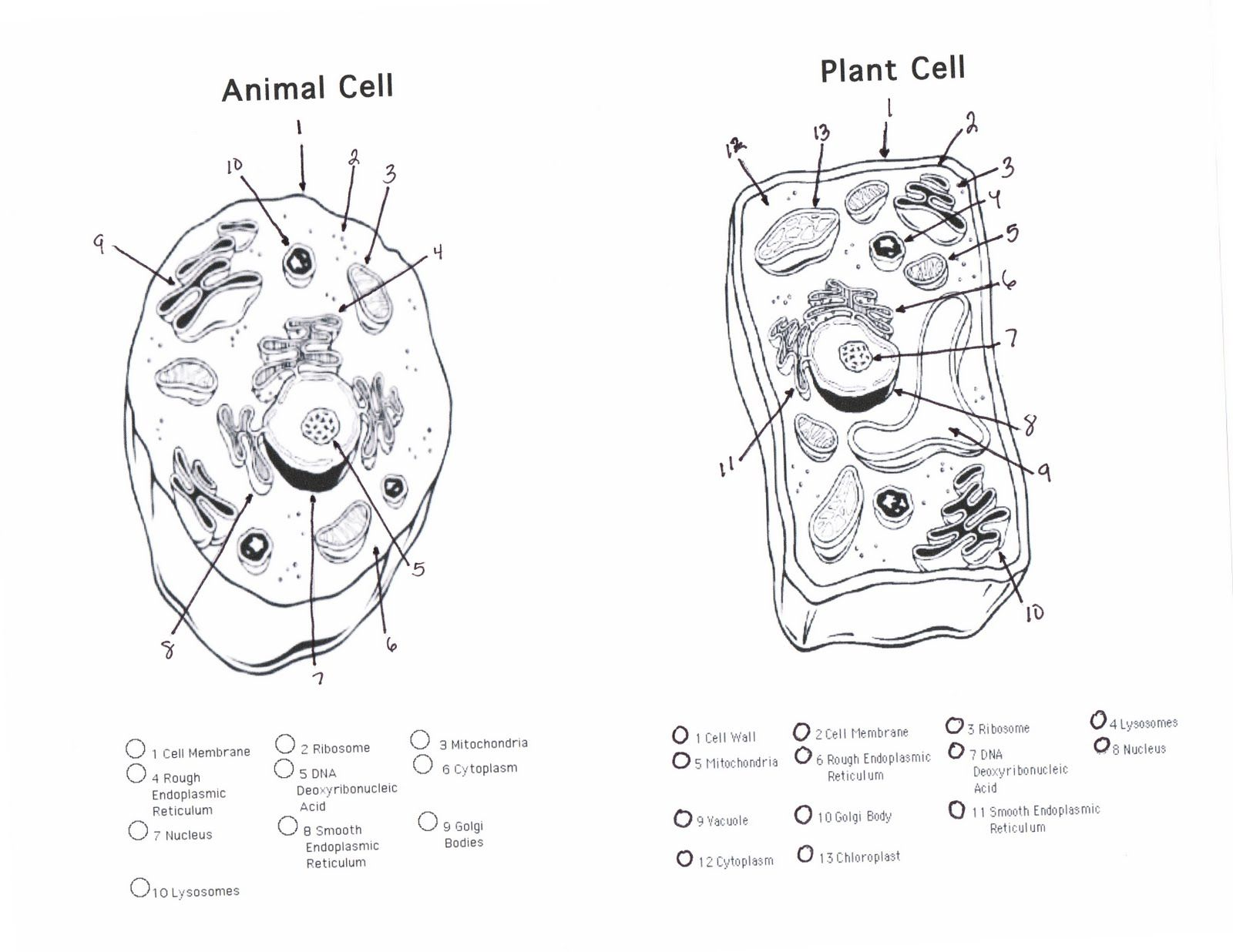 Printable Biology Coloring Pages