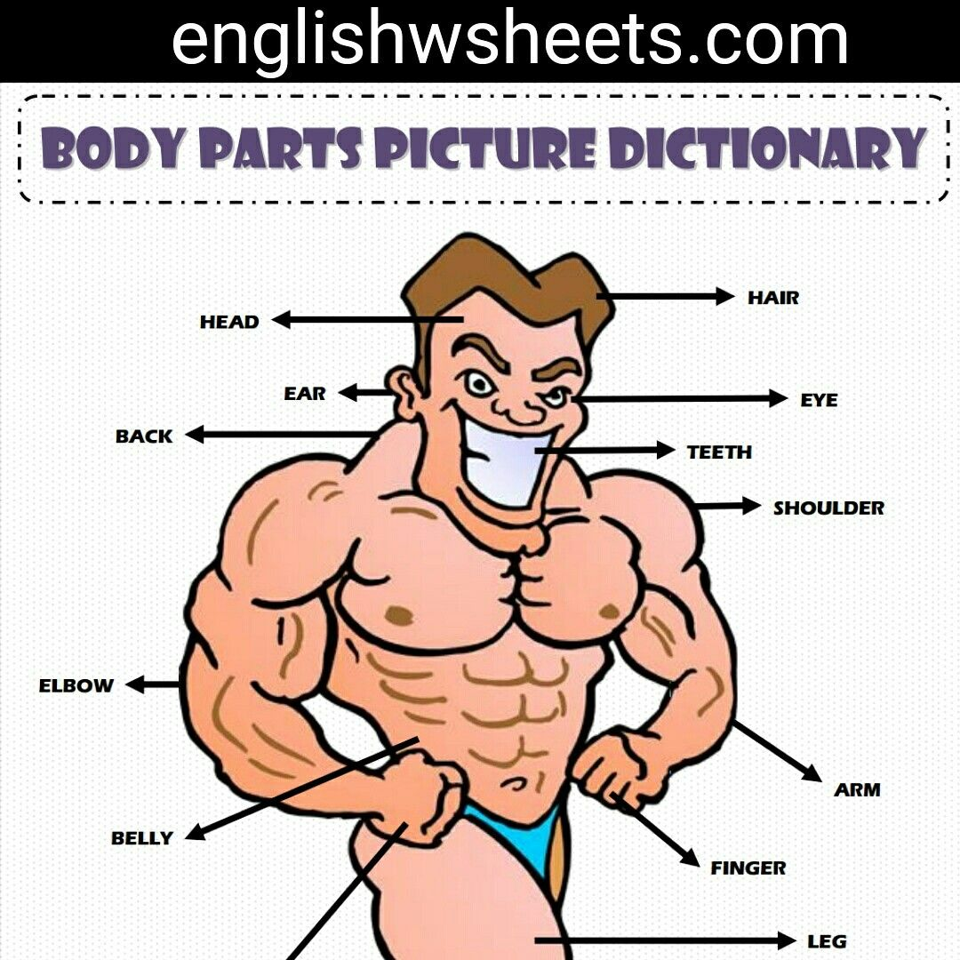 Body Parts Esl Printable Picture Dictionary For Kids Body Parts Bodyparts Vocab Vocabulary