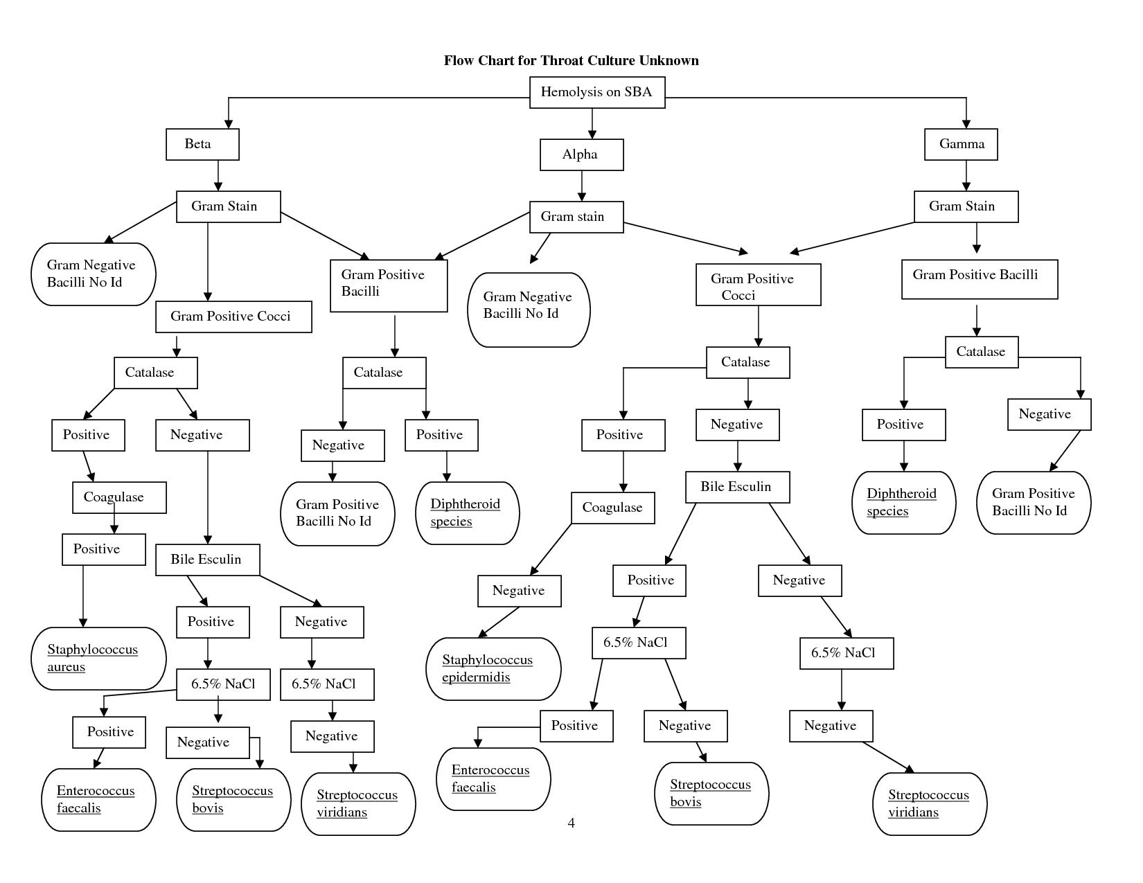 Gram Negative Identification Flow Chart