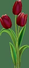 Image result for clara tulip clipart