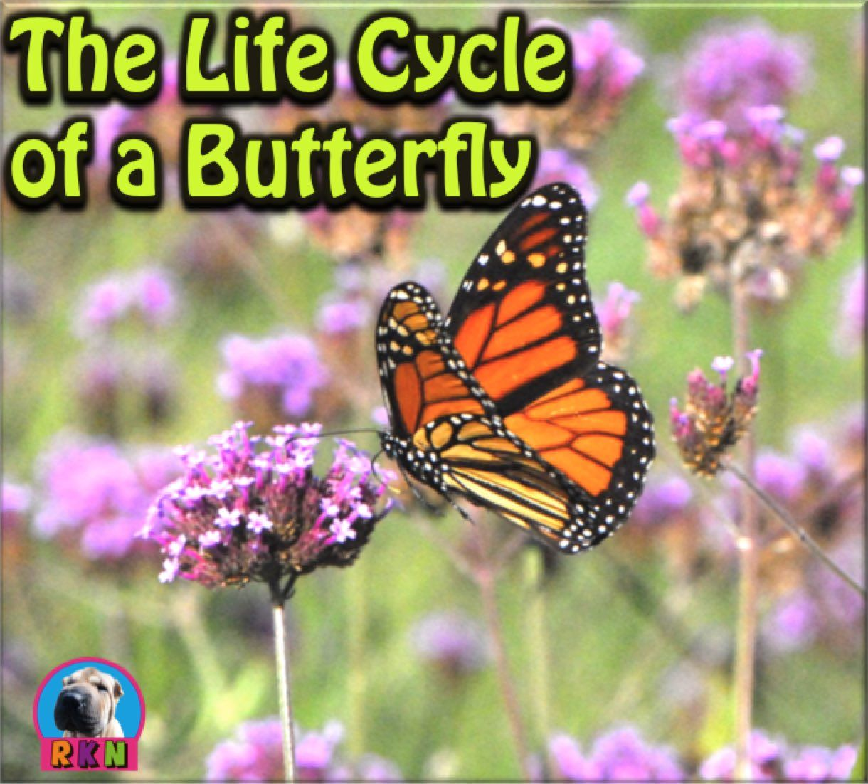 Free The Life Cycle Of A Butterfly Butterfly