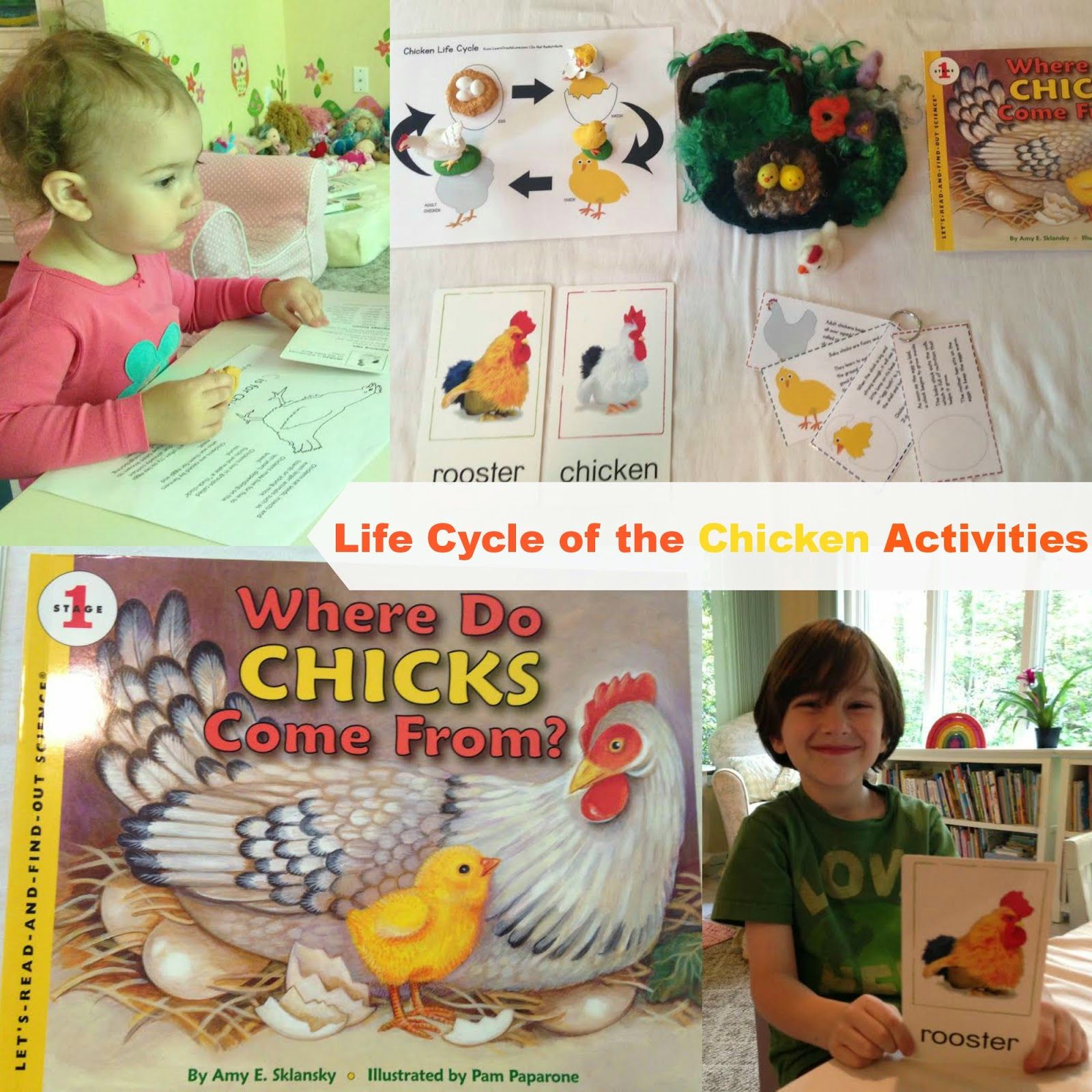 Natural Beach Living Life Cycle Of A Chicken Plus Egg Science