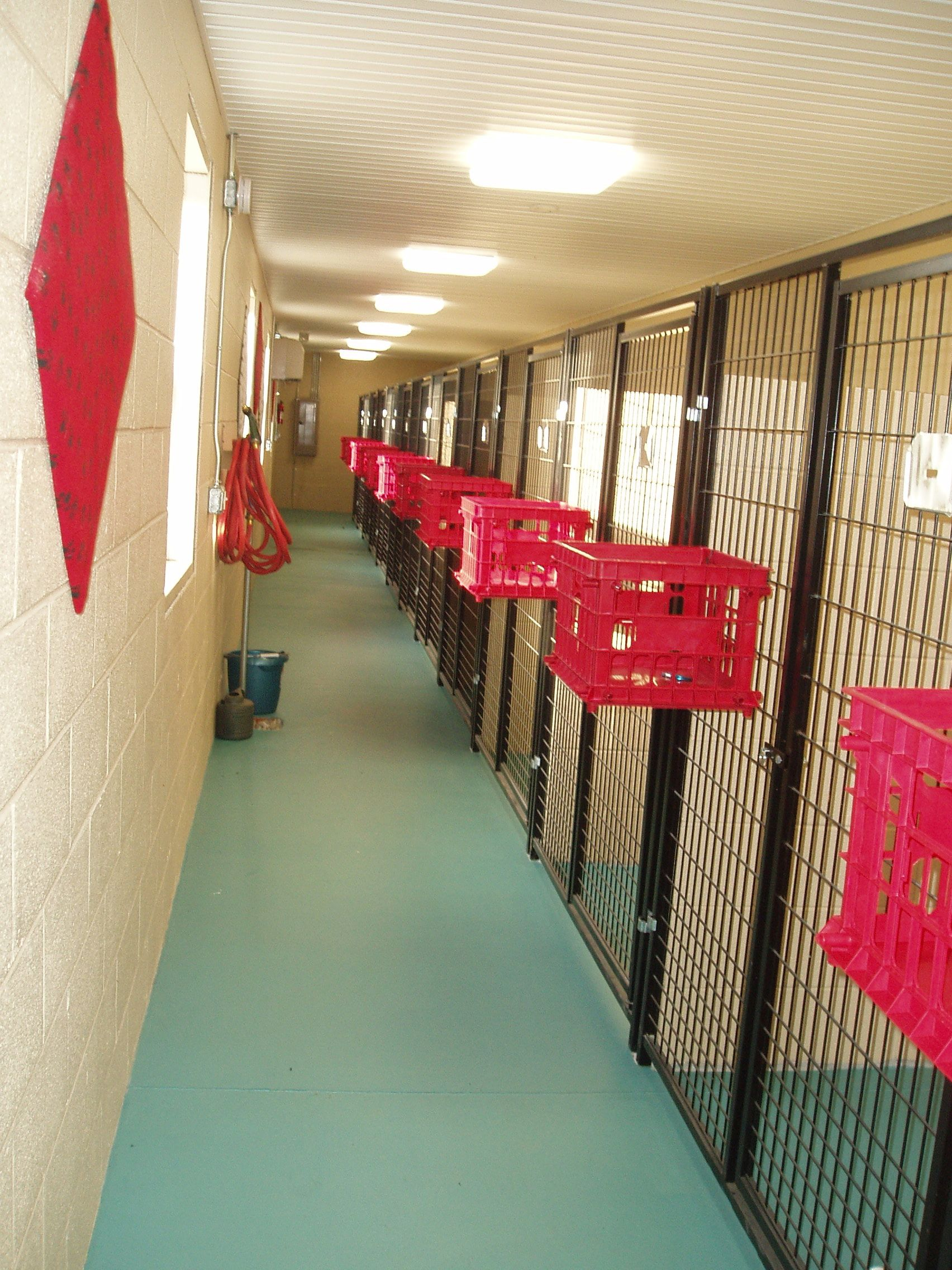 kennels Gallery loose kibble falls through off the