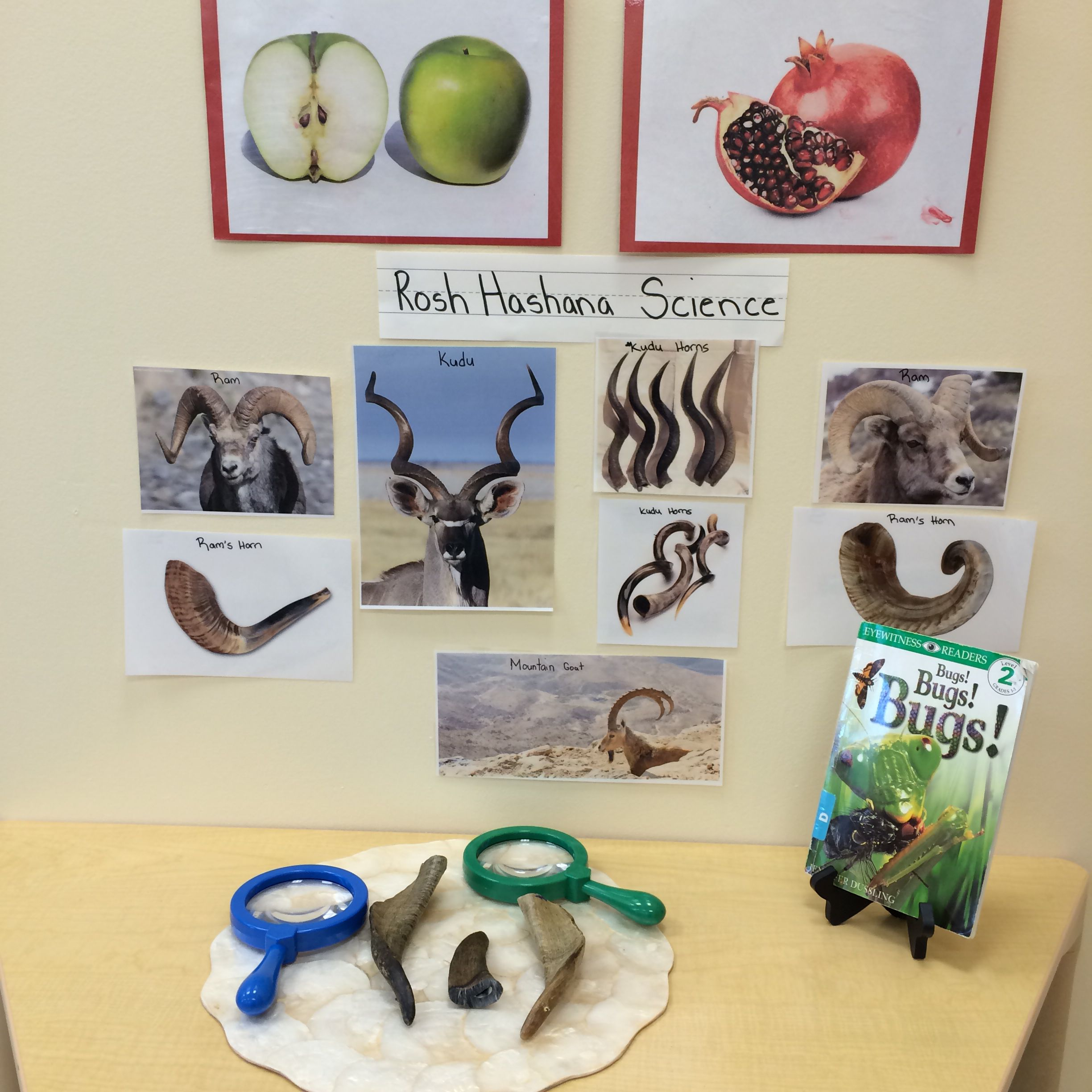 Rosh Hashana Science Display