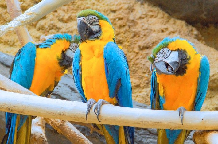 Image result for The Magnificent Macaws