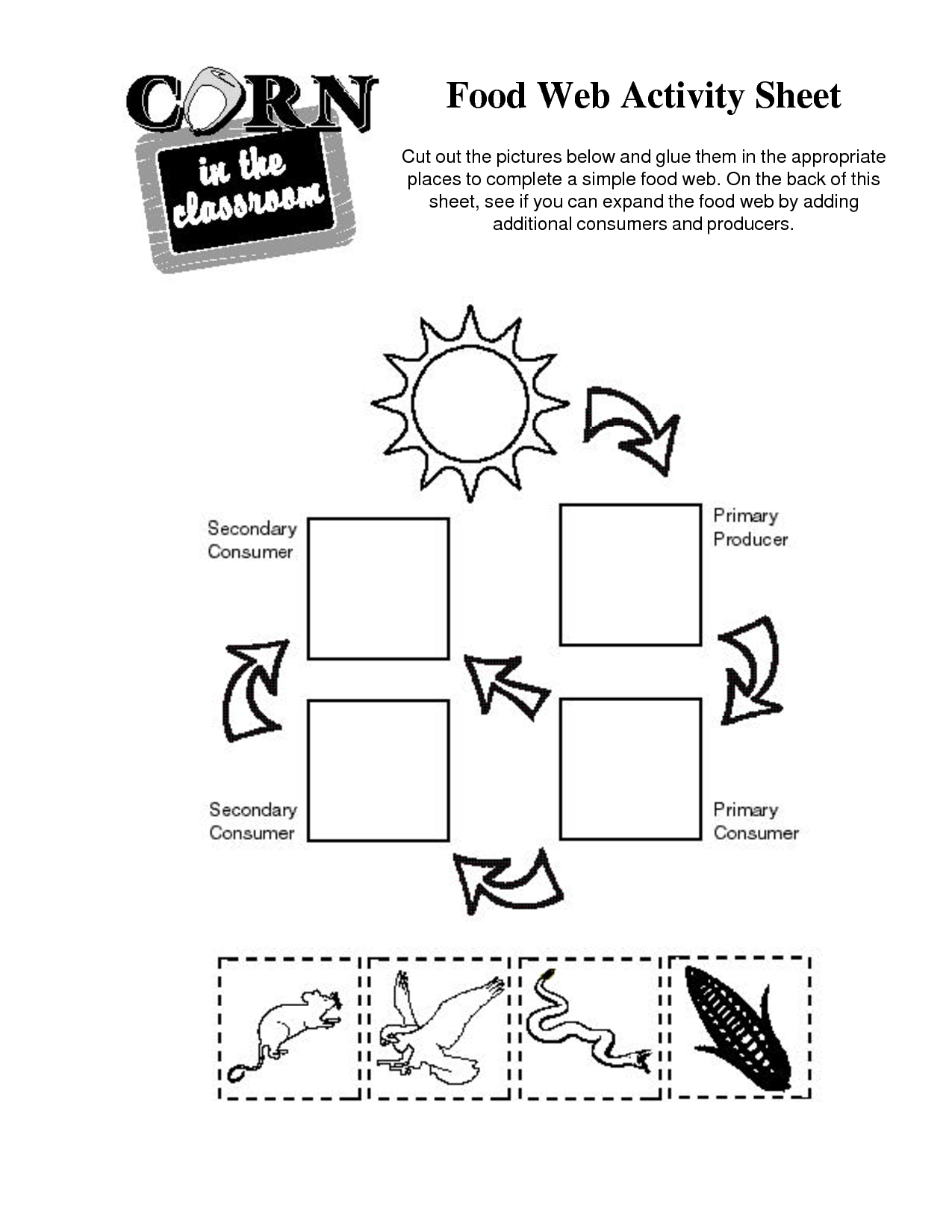 Marine Food Web Worksheet