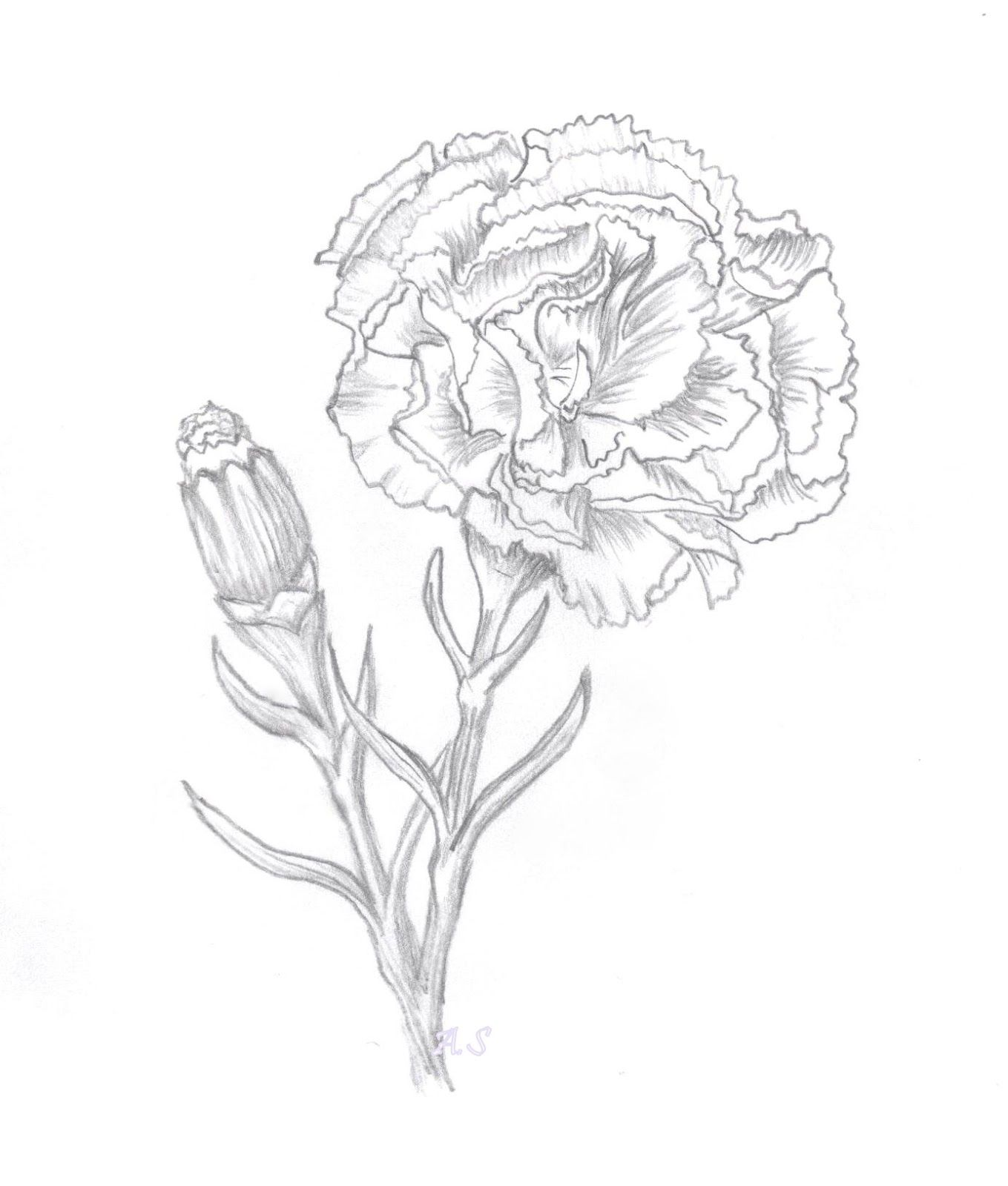 Carnation Flower Sketch