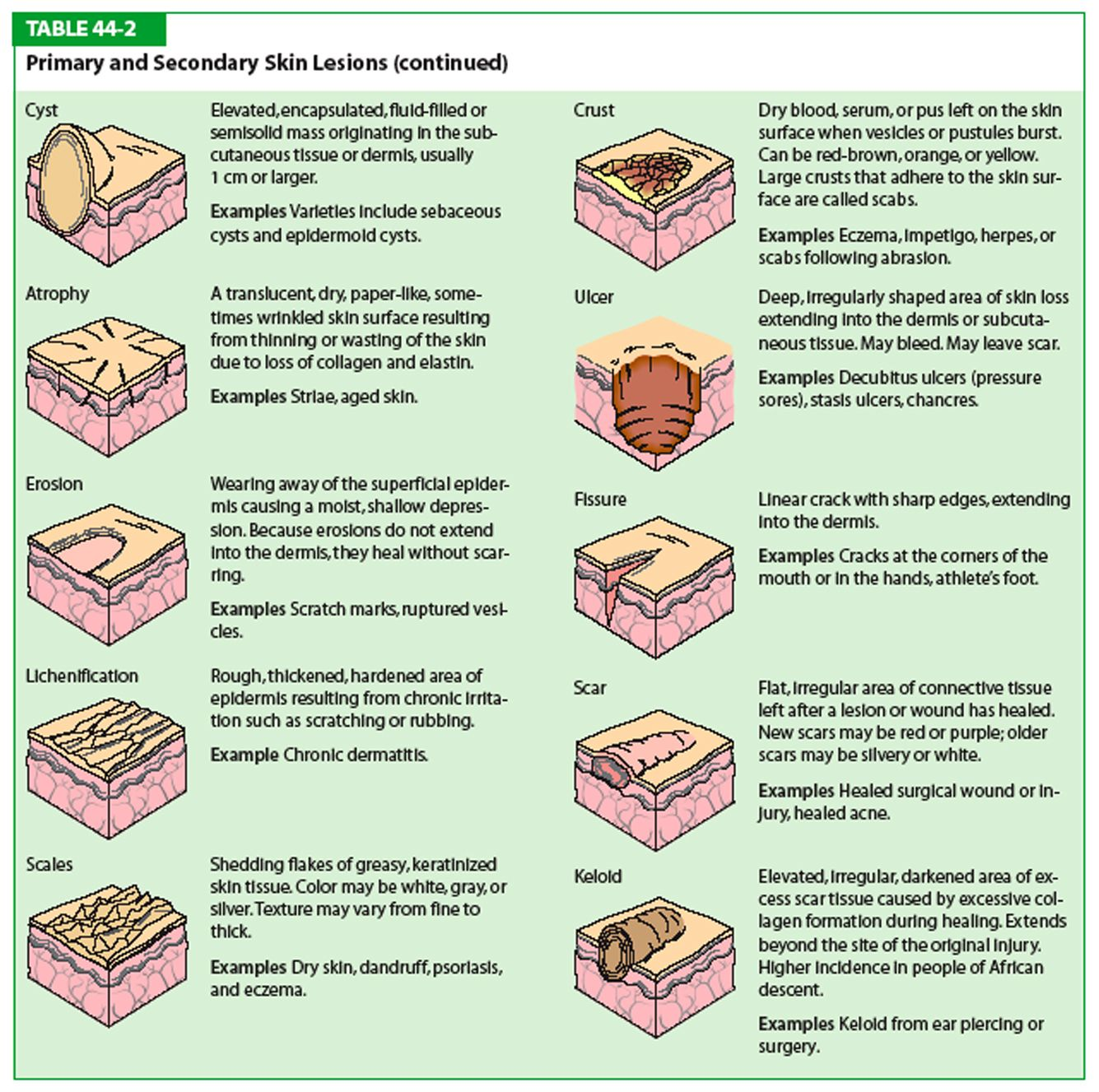 Download Image Types Of Primary Skin Lesions Chart Pc