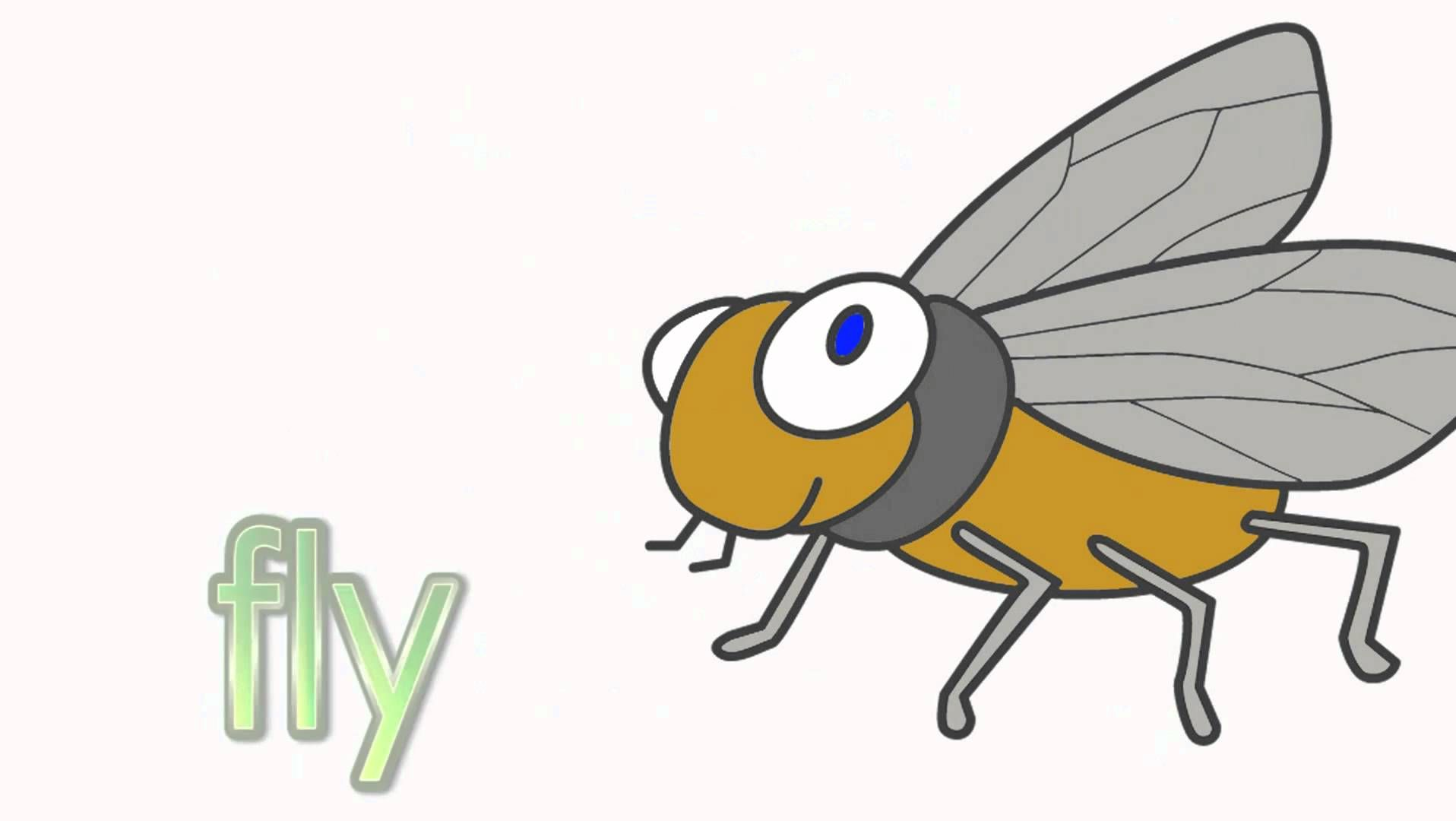Science Zoology Insects Worksheet