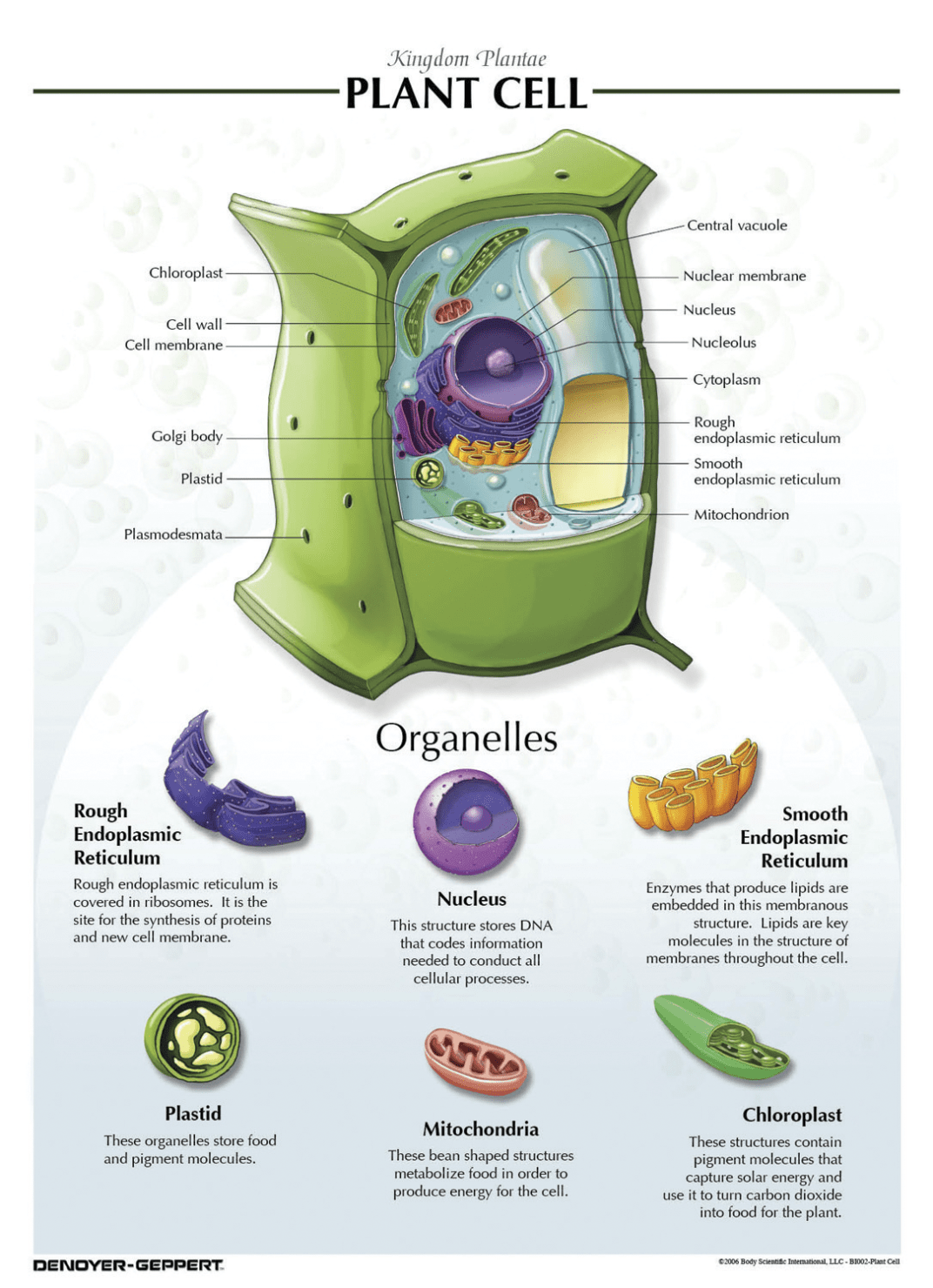 Denoyer Geppert Plant Cell Chart