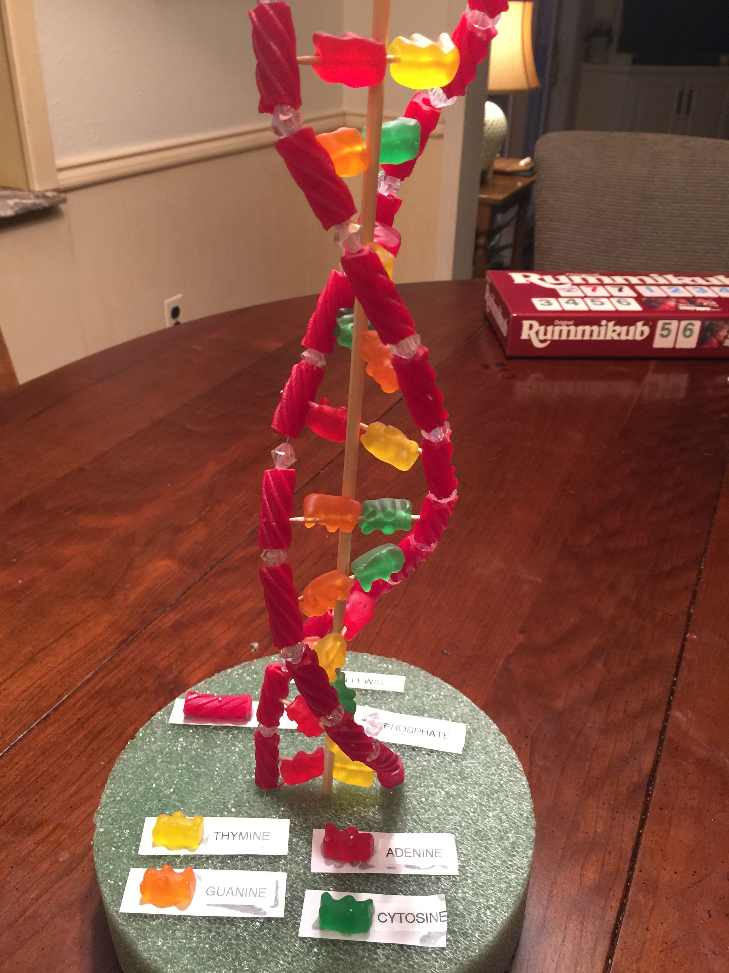 Candy Dna Strand 7th Grade