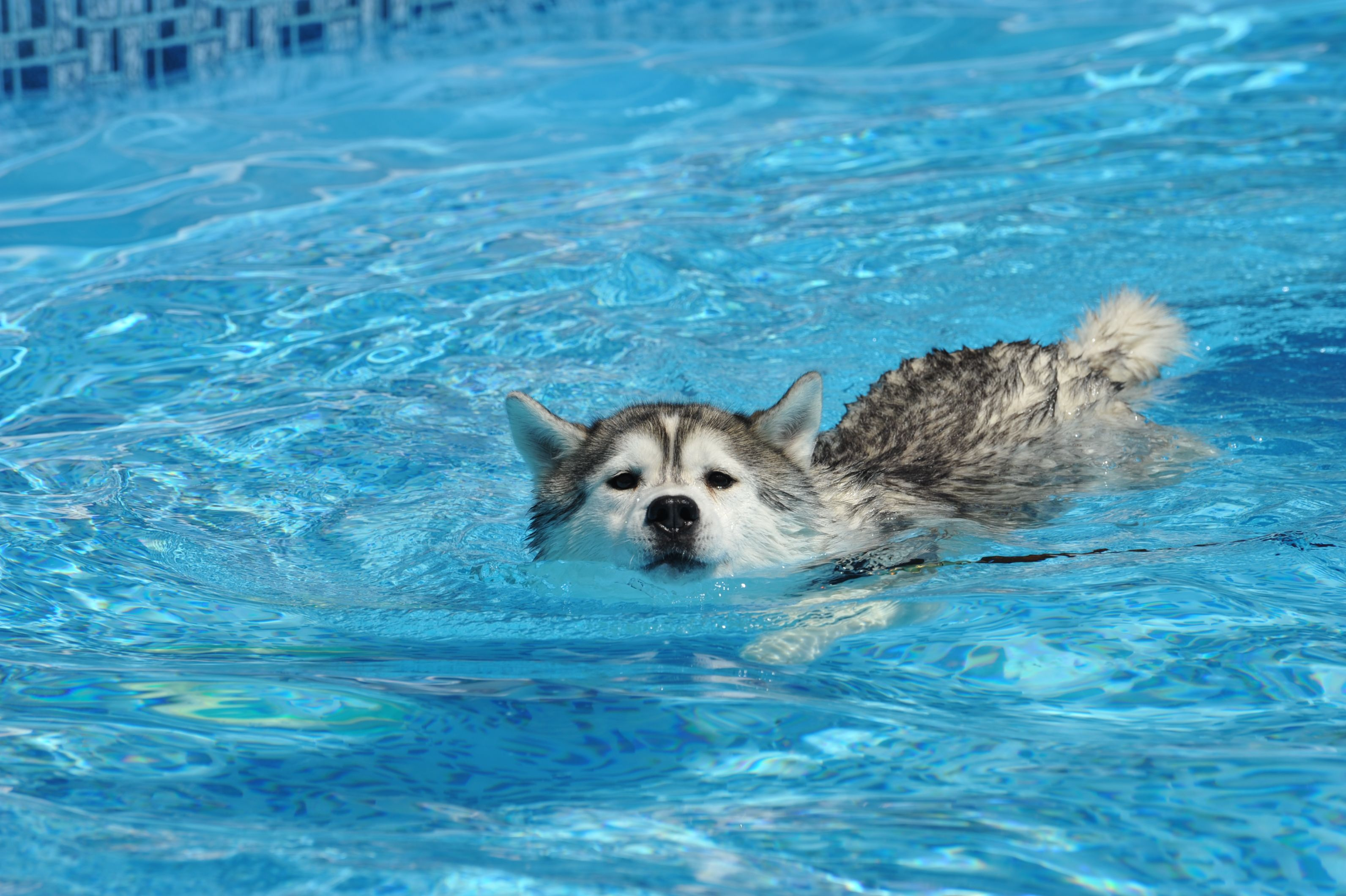 20 Dogs Who Are Definitely Ready For A Pool Party