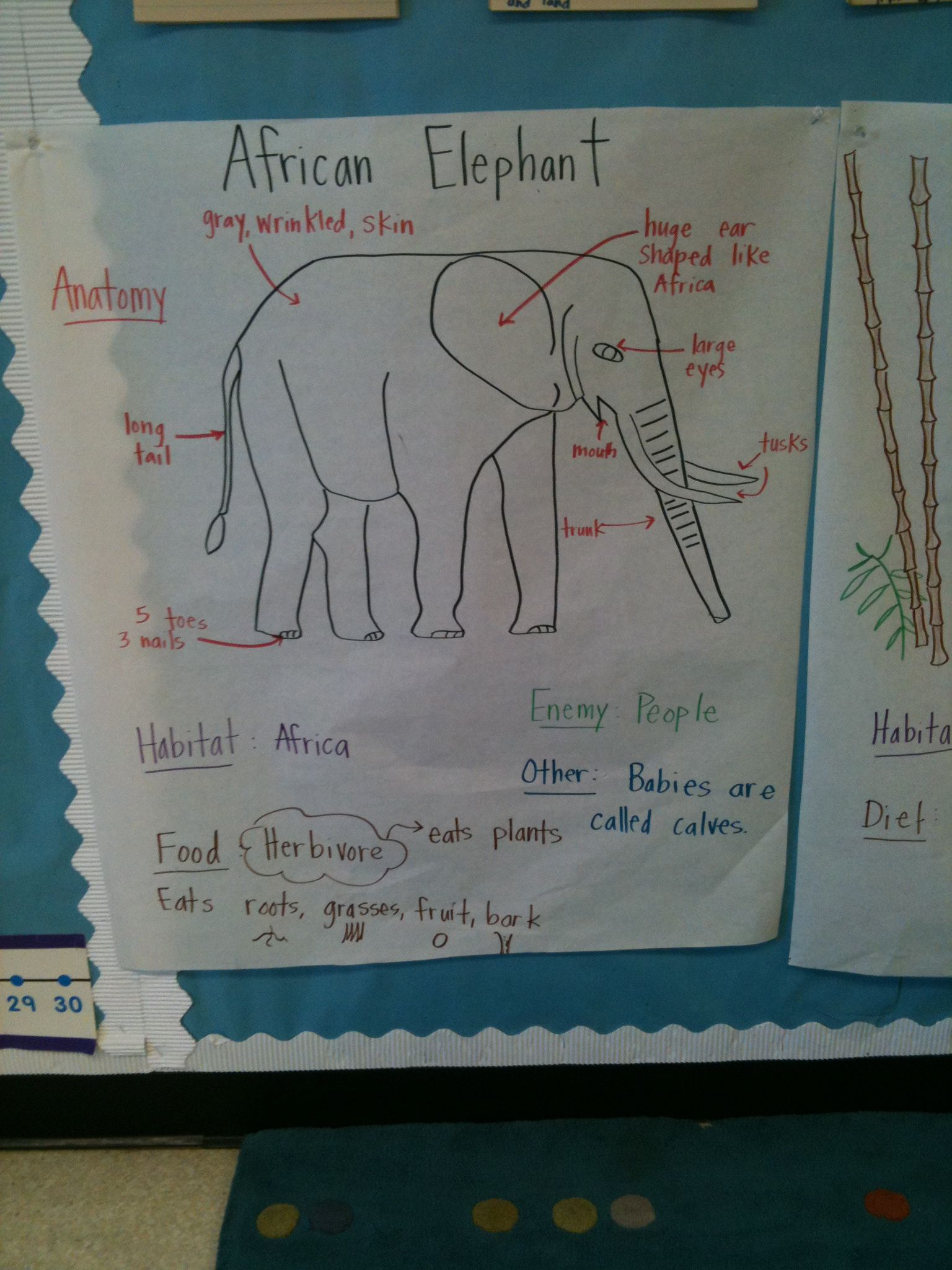Animal Unit Elephant Pictorial Input Chart