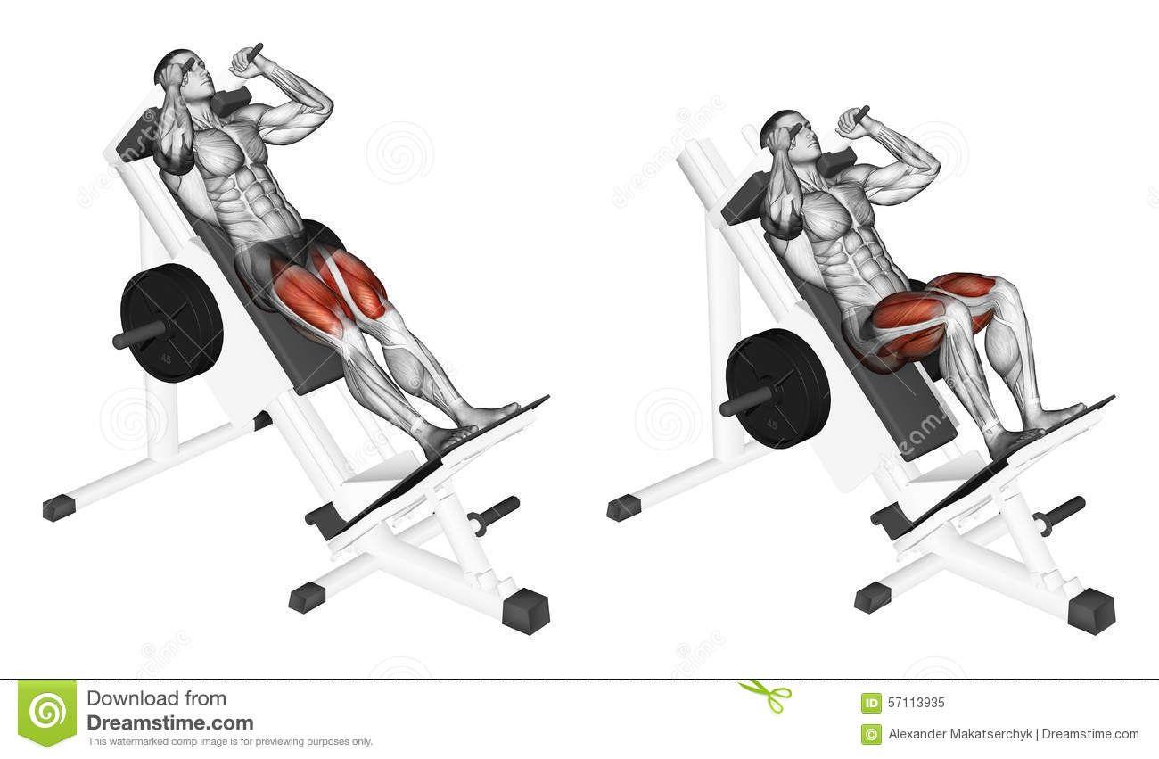 Exercising Hack Squats Stock Illustration