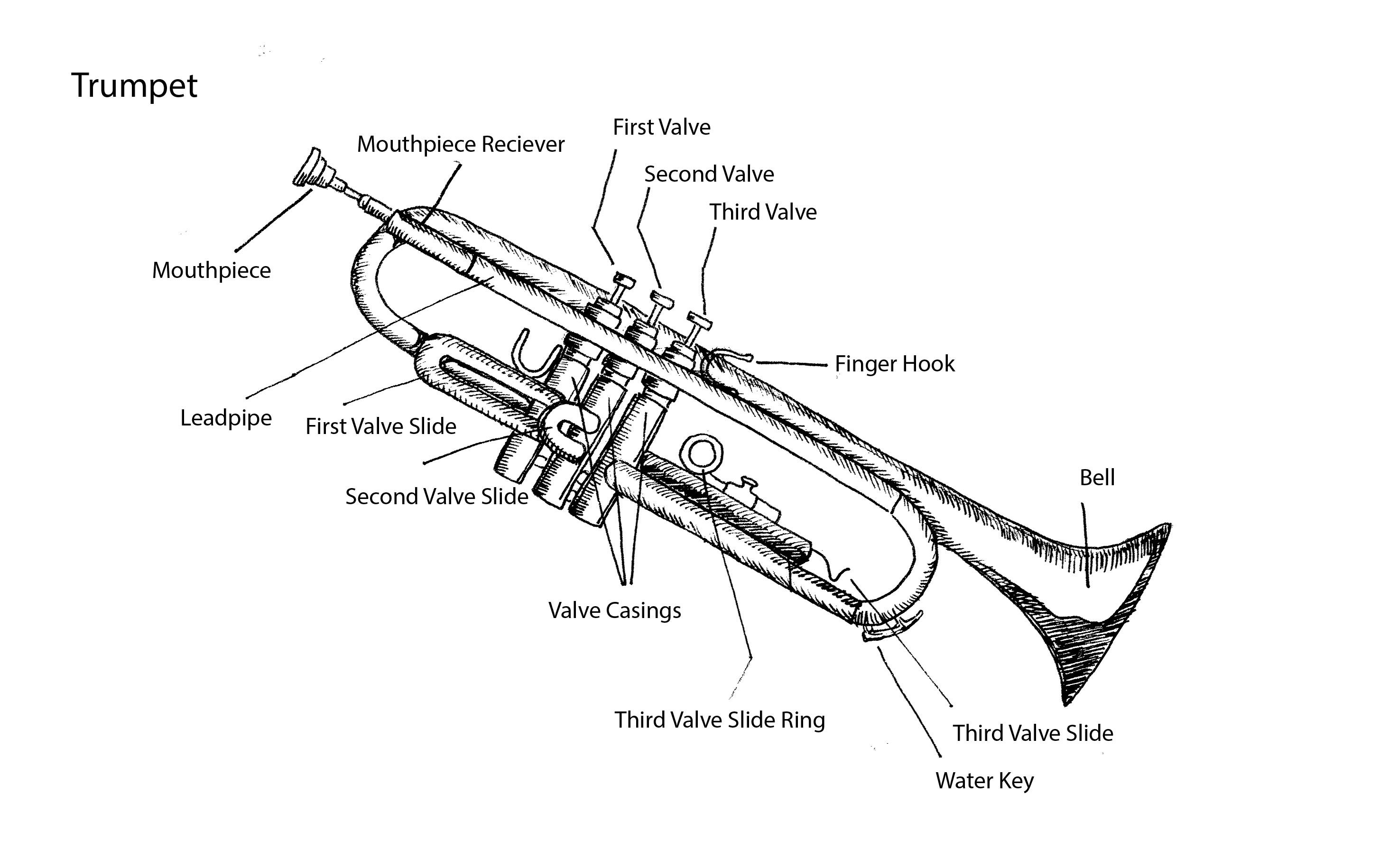 Parts Of Trumpet By Tracie Noles Ross