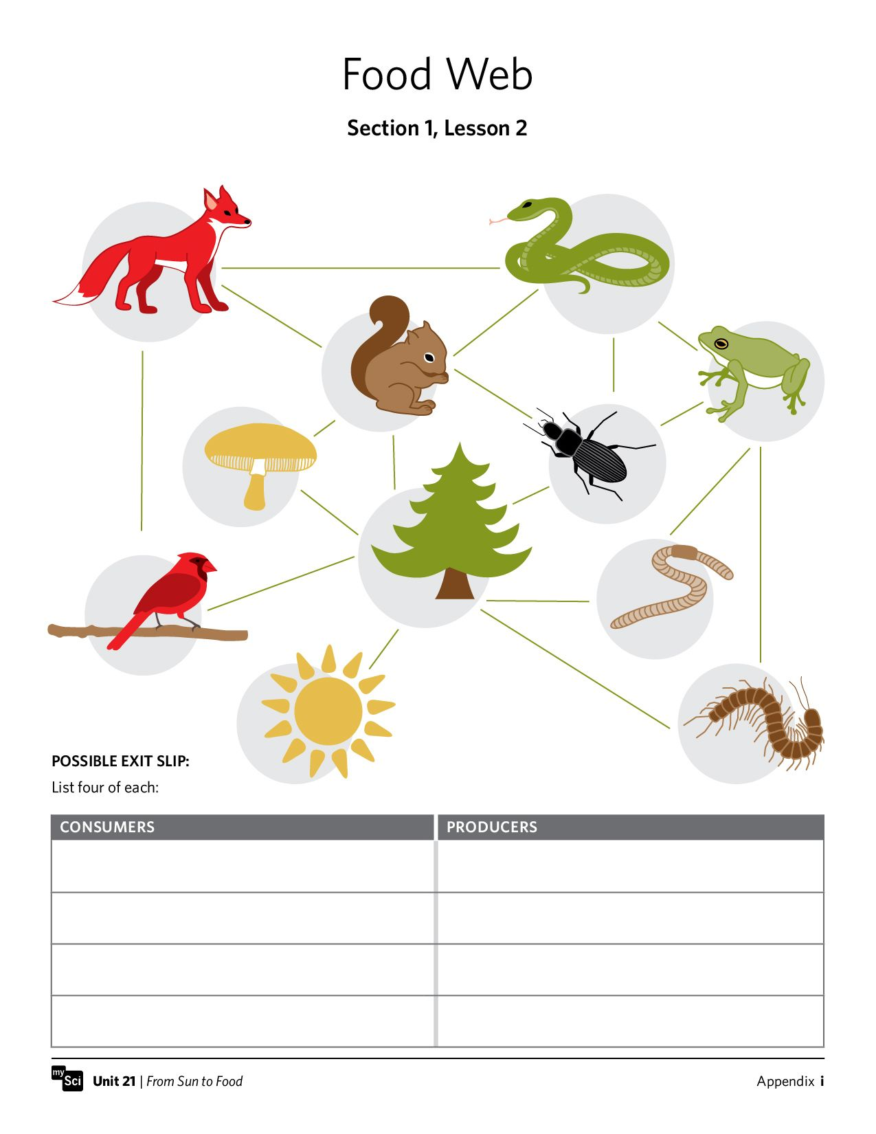 Food Web Worksheet Fifthgrade Science