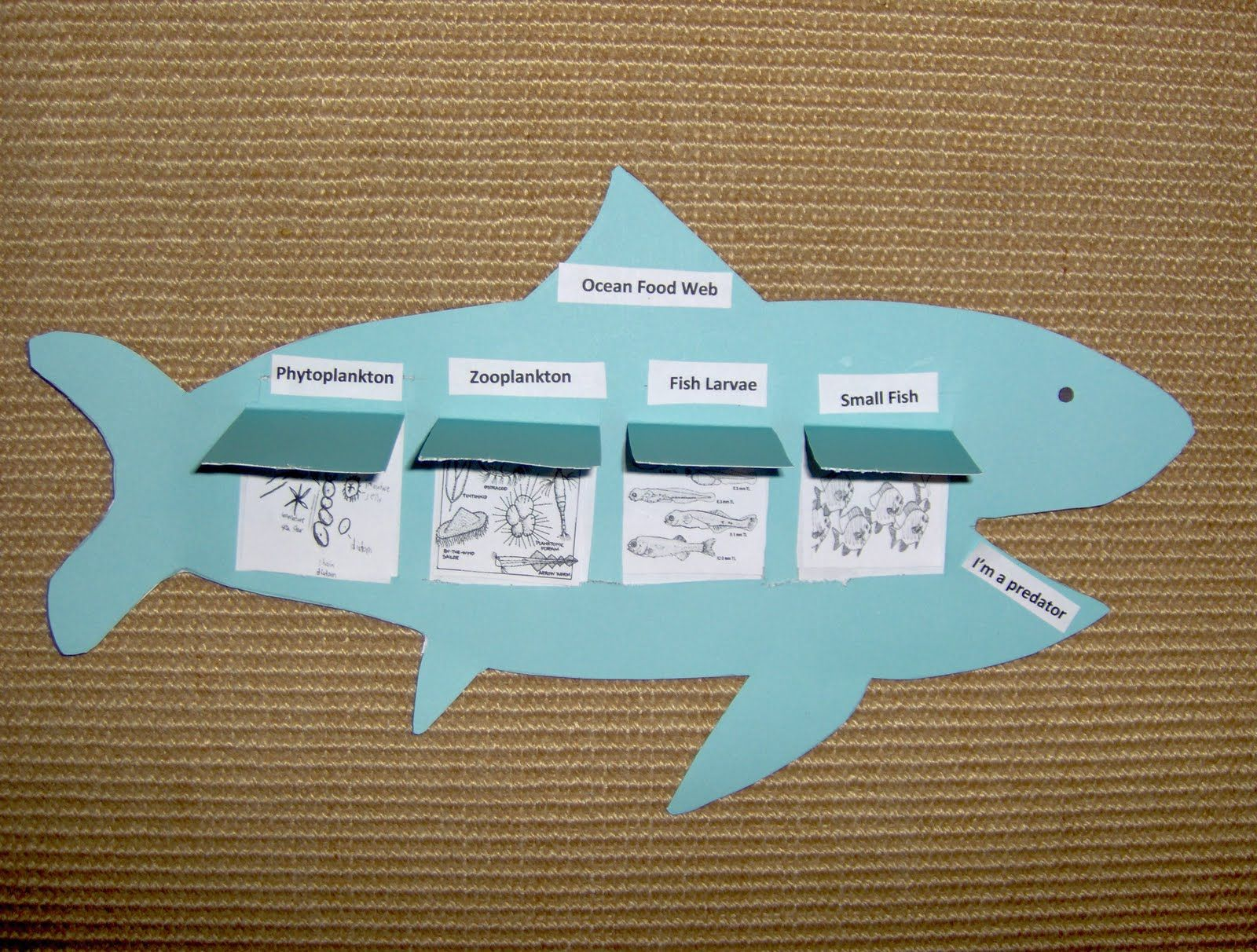 Ocean Food Web Foldable Bookishwaysspot