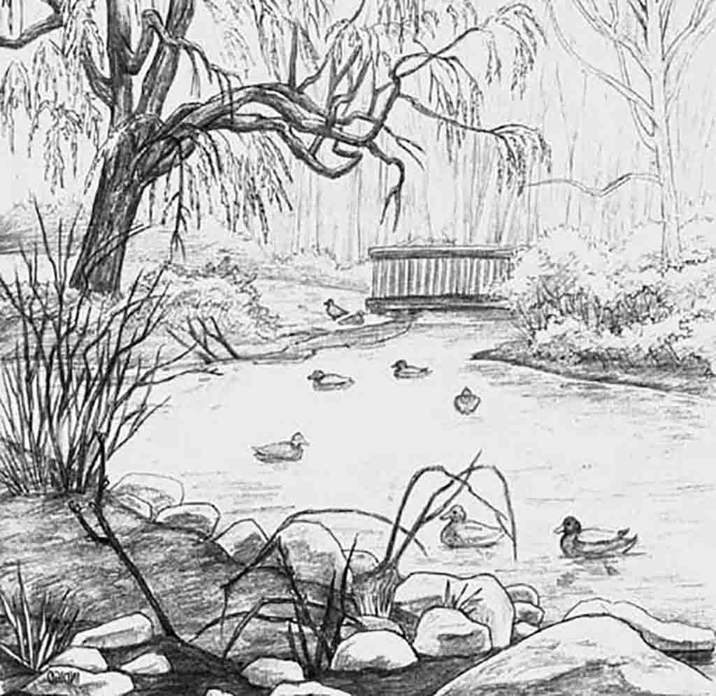 Duck Pond Drawing